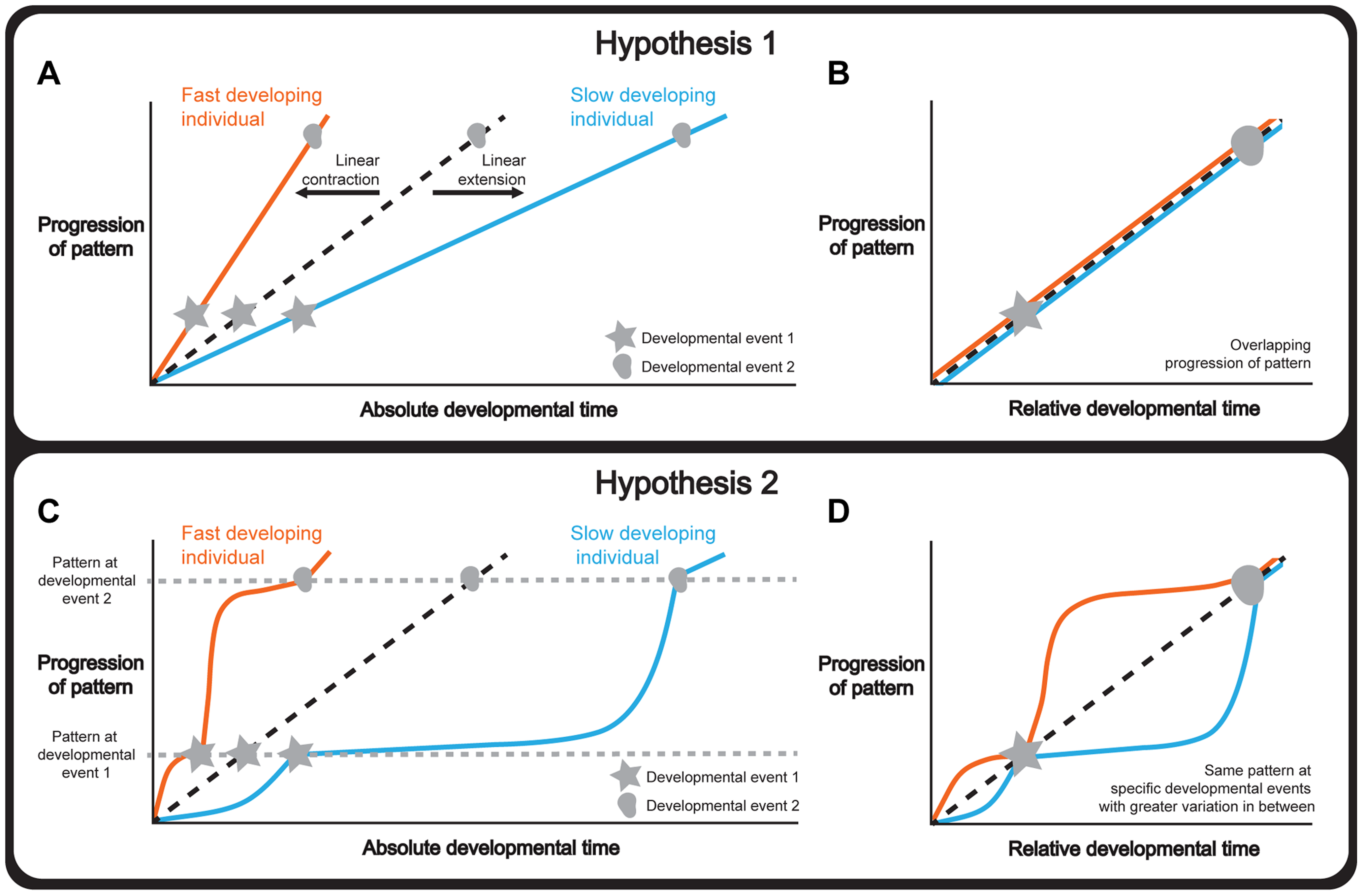 Hypotheses to explain how organ and whole-body development are coordinated.
