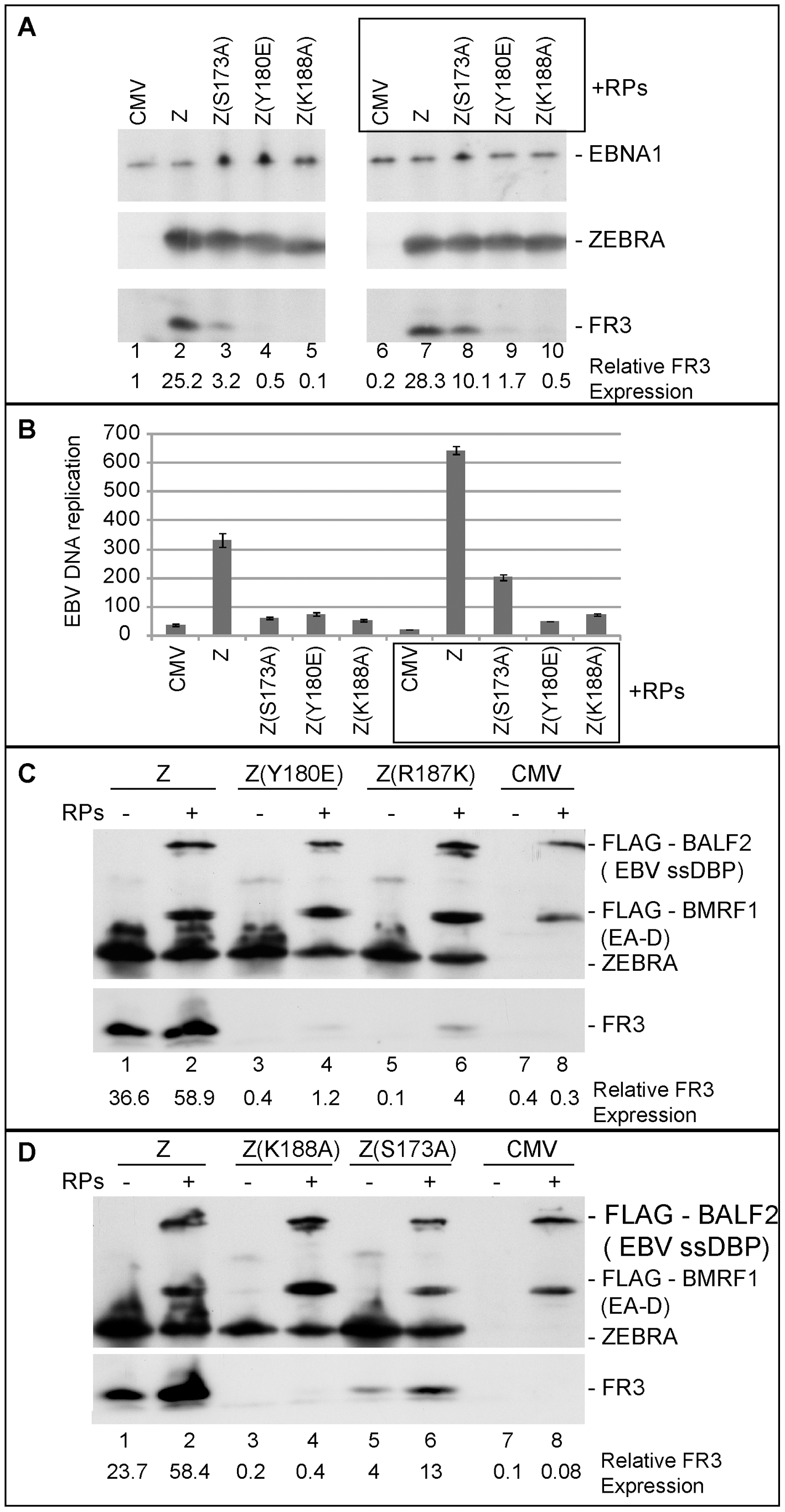 Over-expression of EBV replication proteins partially suppresses the phenotype of Z(S173A) and Z(R187K).