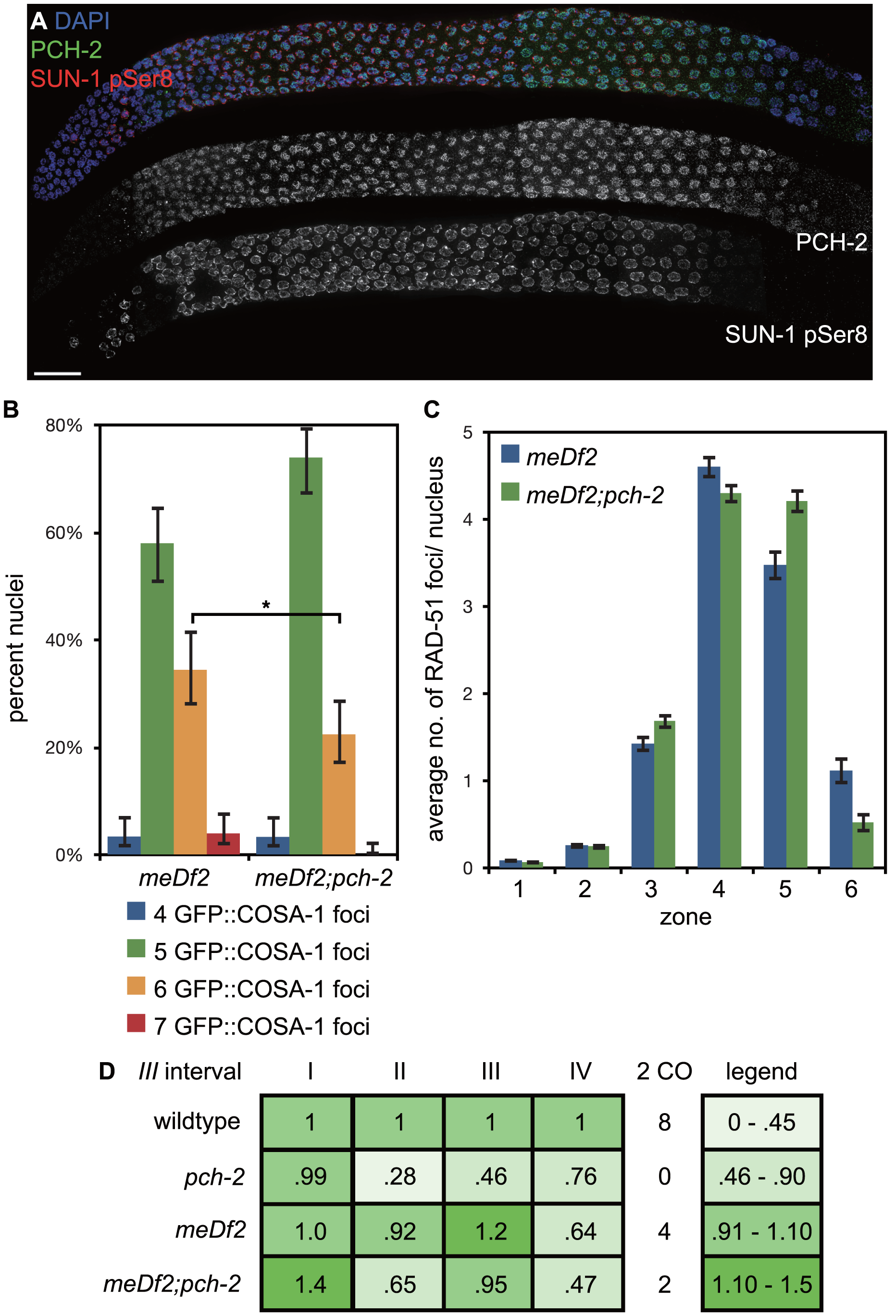 Mutation of <i>pch-2</i> reduces the percentage of nuclei with six GFP::COSA-1 foci in <i>meDf2</i> homozygotes.