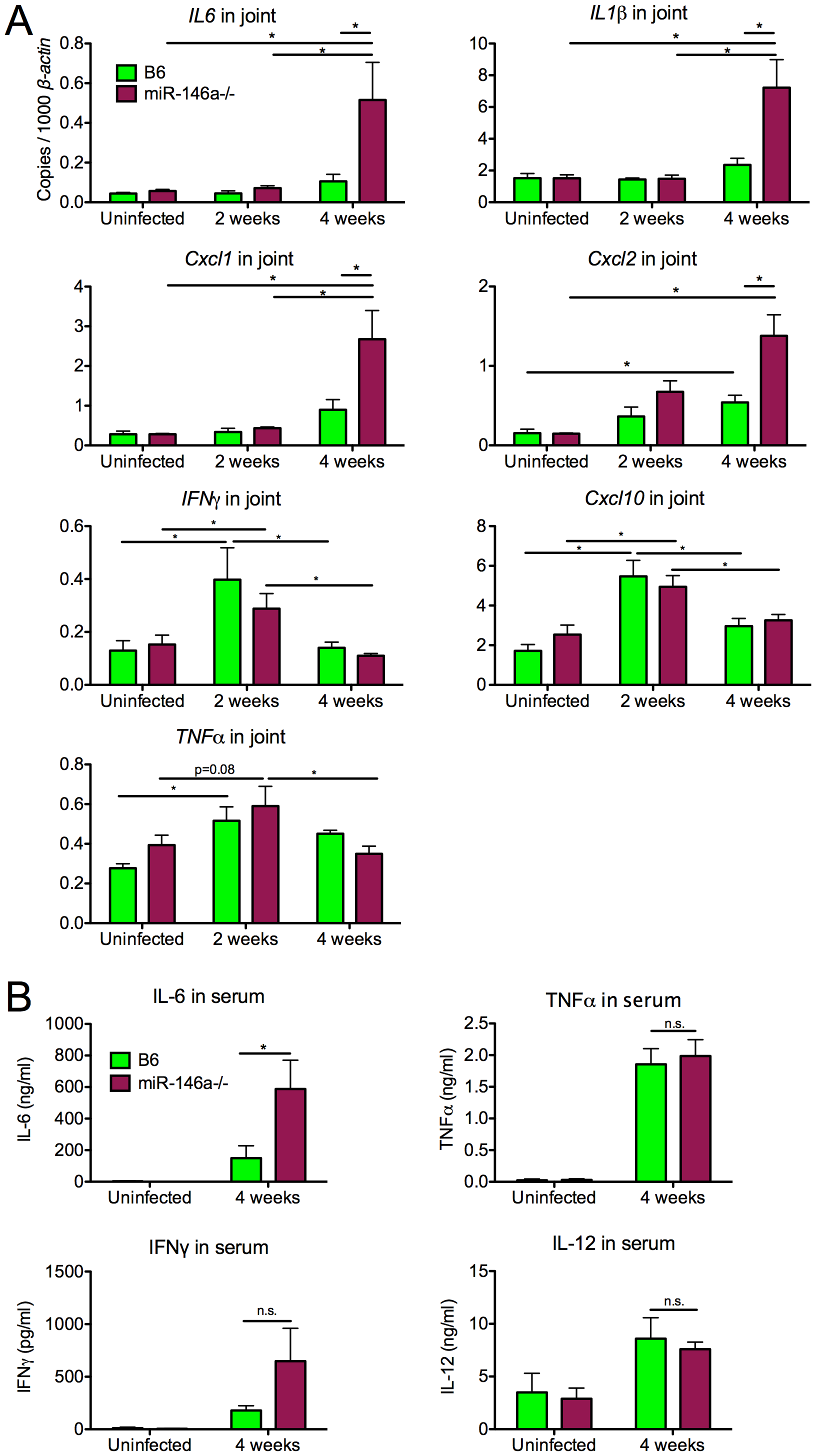 B6 miR-146a<sup>−/−</sup> mice exhibit hyperactive expression of a subset of NF-κB target cytokines and chemokines at 4 weeks post-infection.