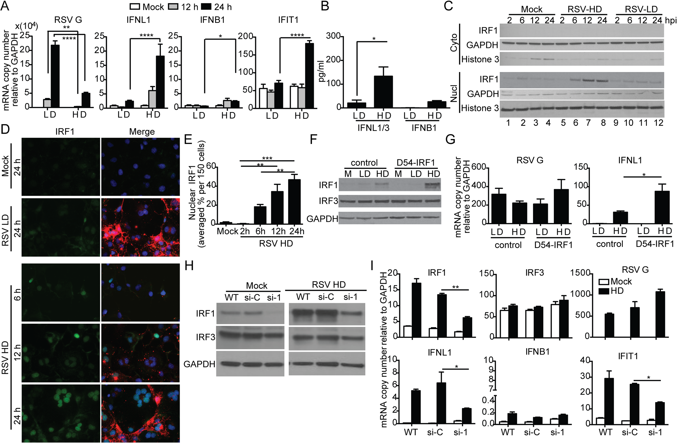 RSV iDVGs stimulate an IRF1/IFNL1-mediated antiviral response.