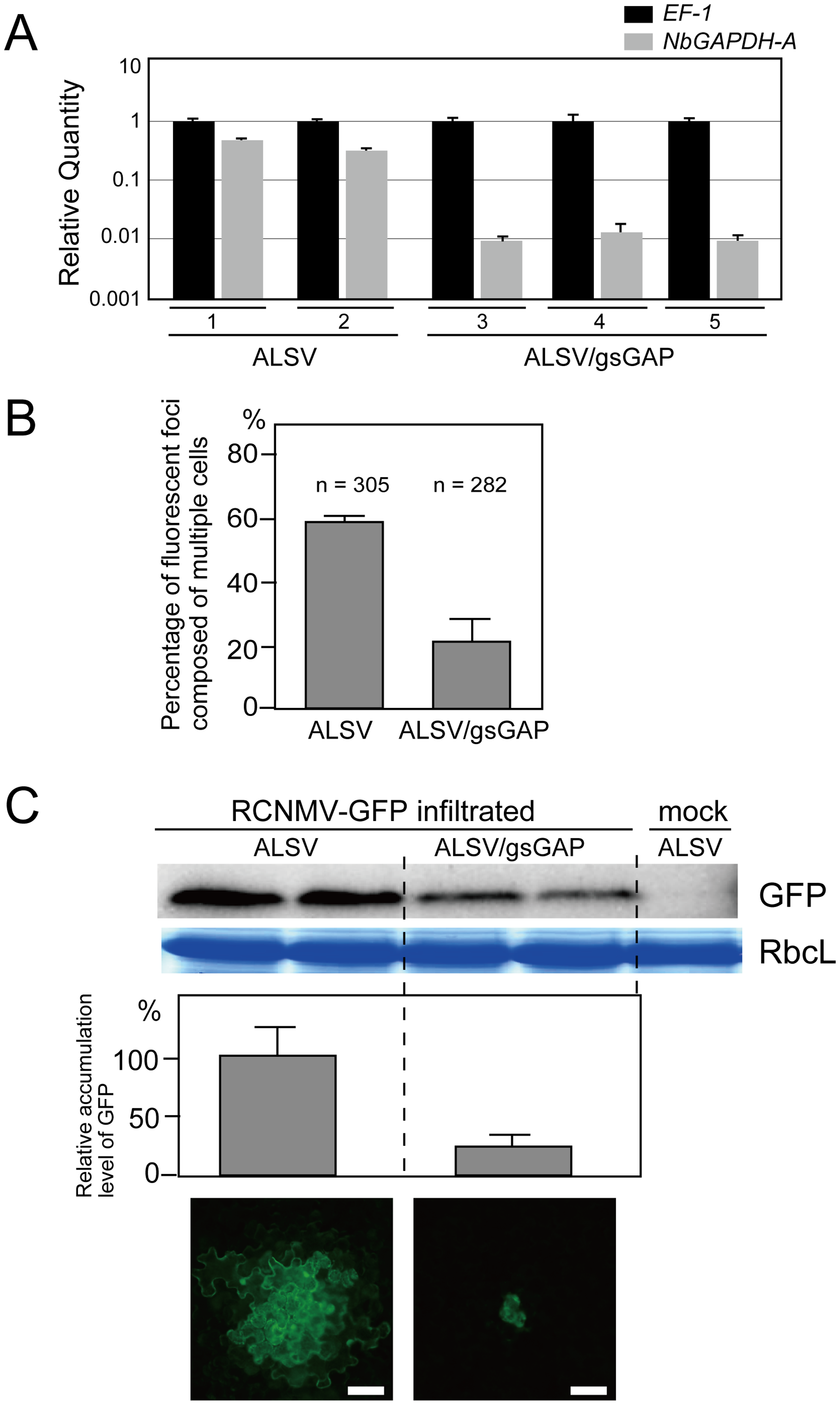 Multiplication of RCNMV is inhibited in <i>NbGAPDH-A</i>-silenced <i>N. benthamiana</i> leaves.