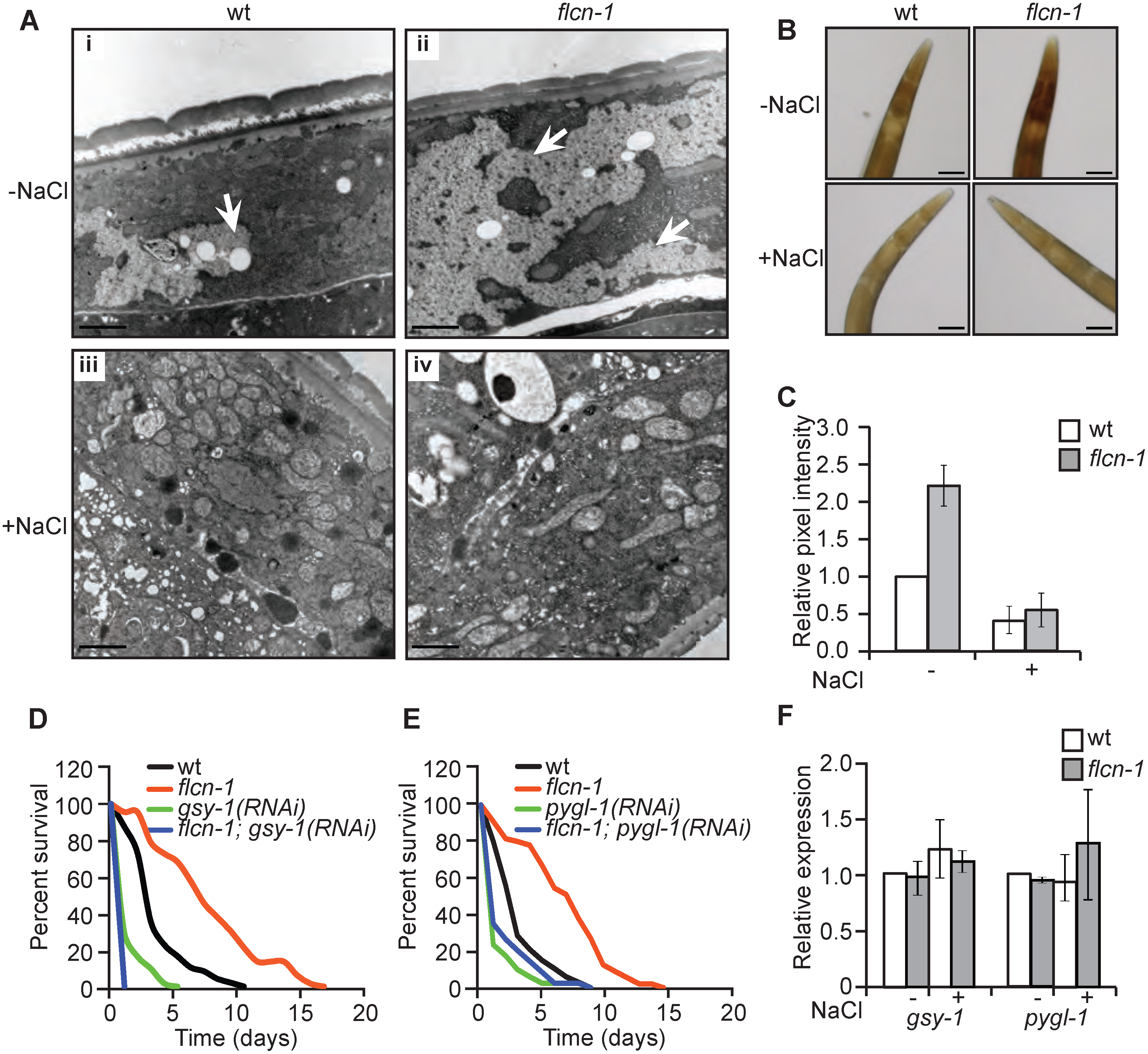 Loss of <i>flcn-1</i> increases glycogen content, which mediates resistance to hyperosmotic stress.