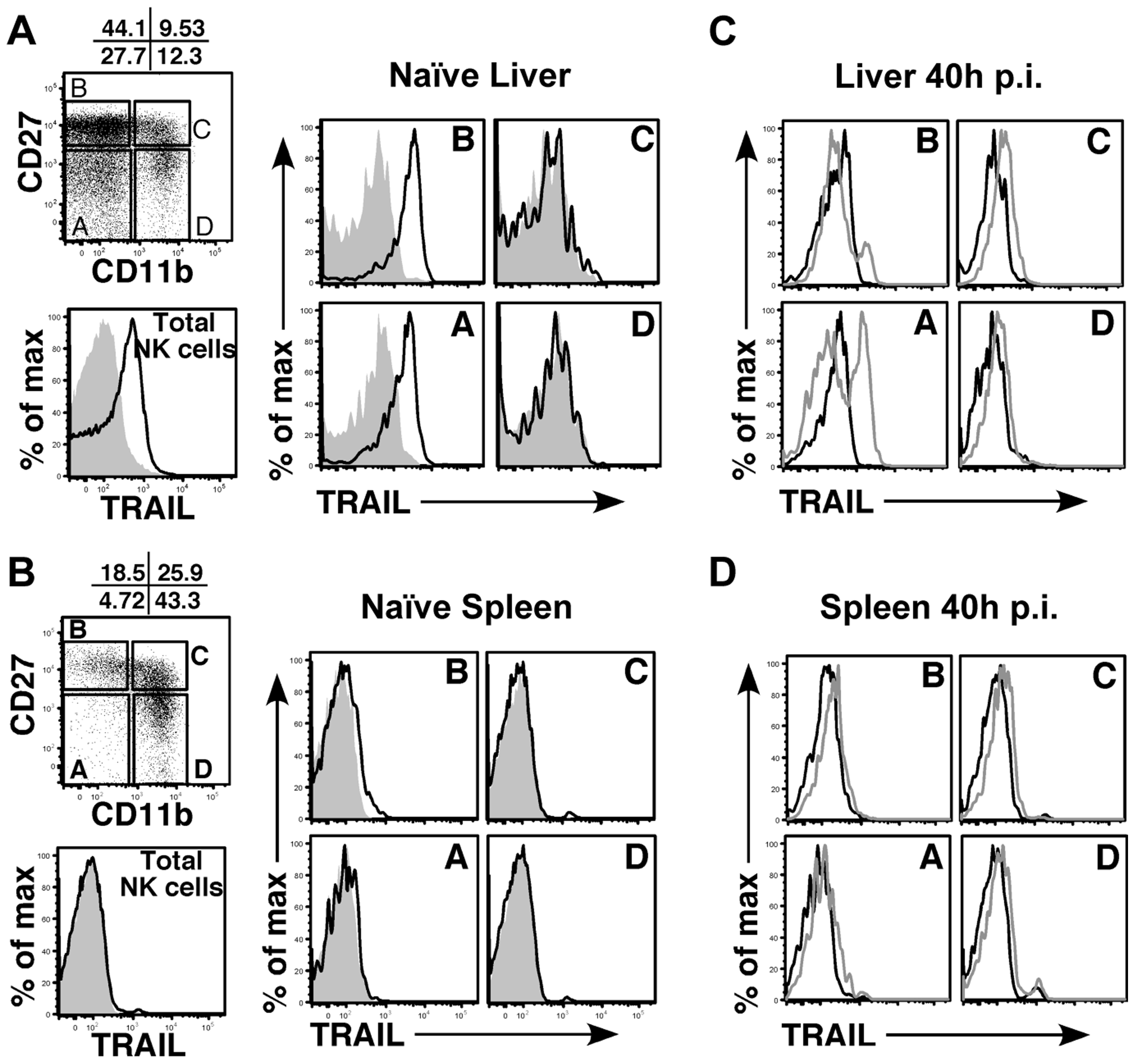 Immature liver NK cells express high TRAIL levels.