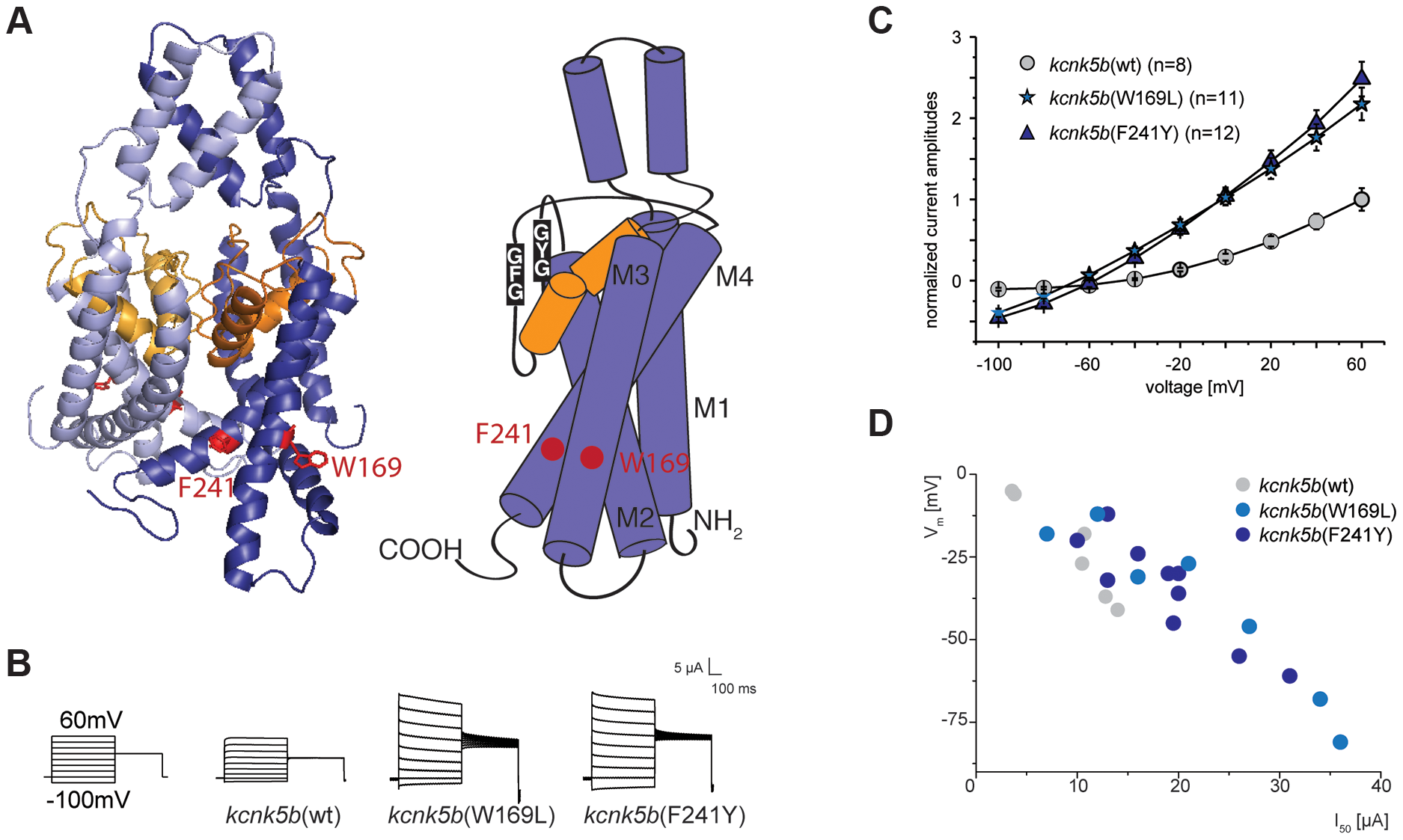 Gain-of-function mutations in <i>kcnk5b</i> affect ionic conduction and lead to hyperpolarization of the cell.