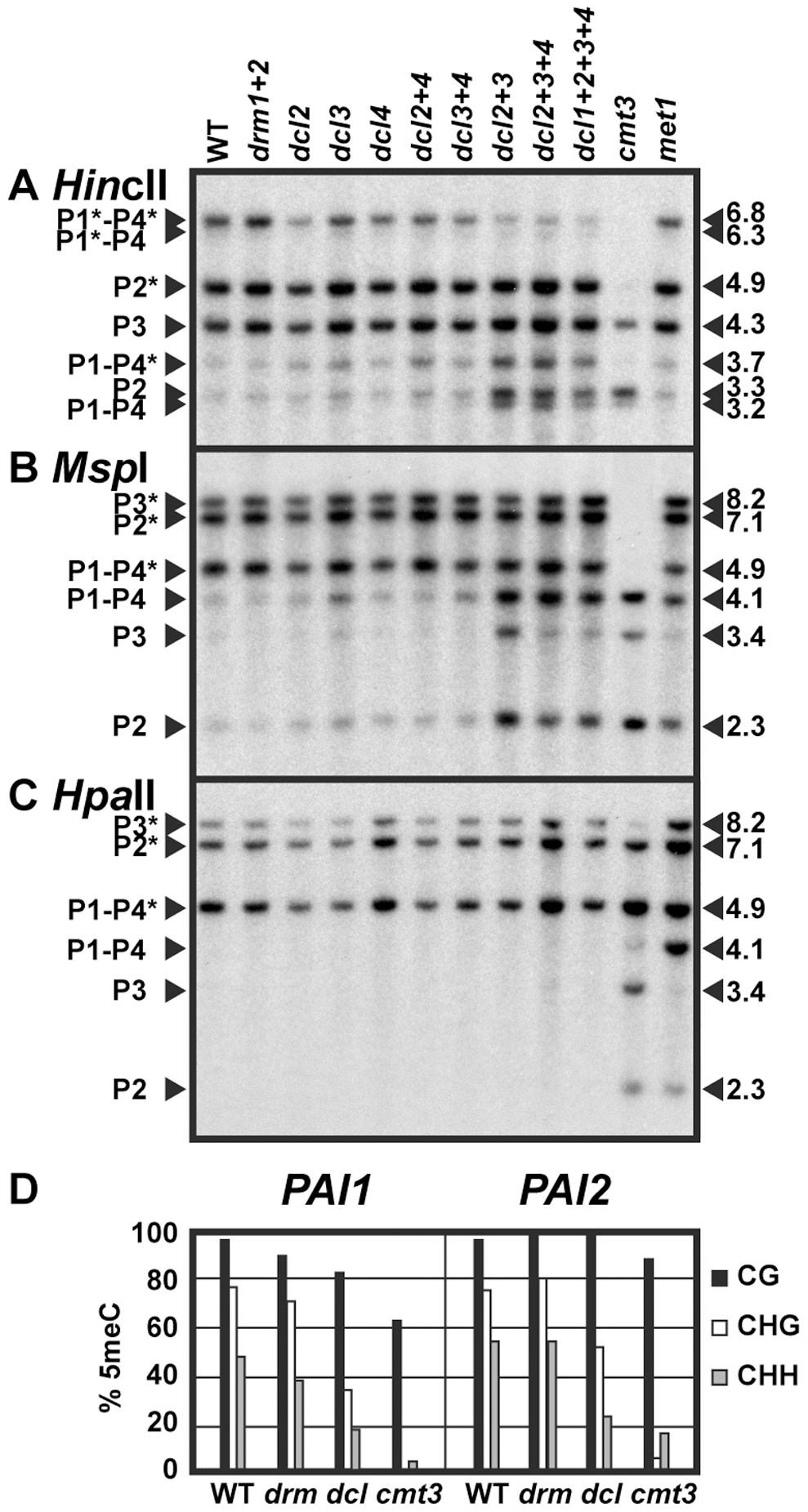 <i>PAI</i> non-CG methylation levels are reduced in <i>dcl</i> mutants.