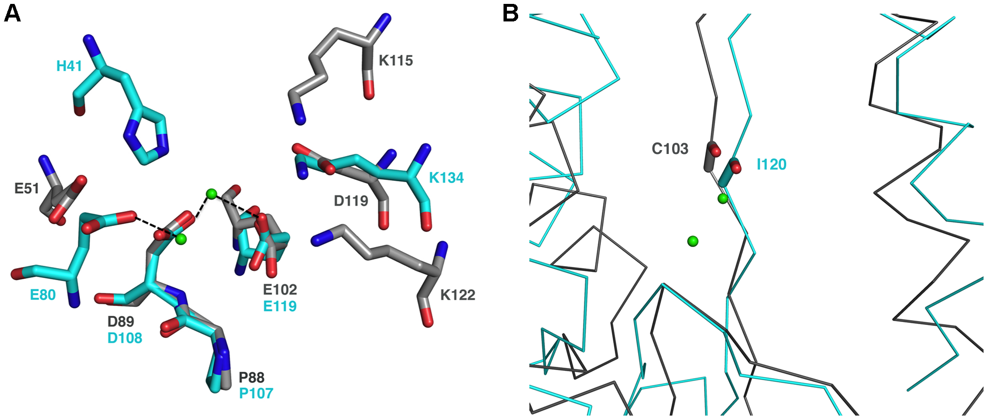 The endonuclease active site.