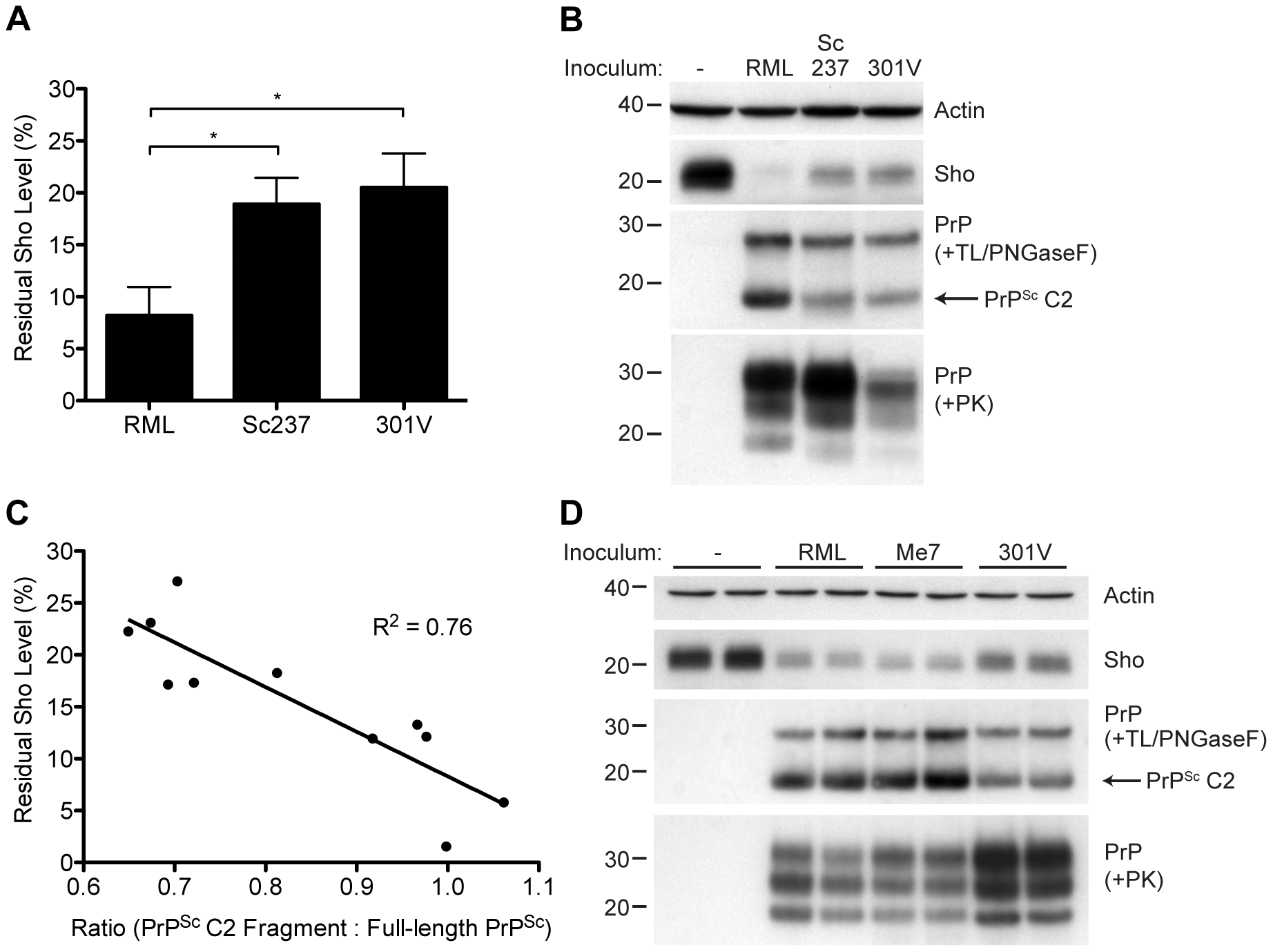 Decreased Sho levels correlate with the amount of PrP<sup>Sc</sup> C2 fragment present in prion-infected animals.