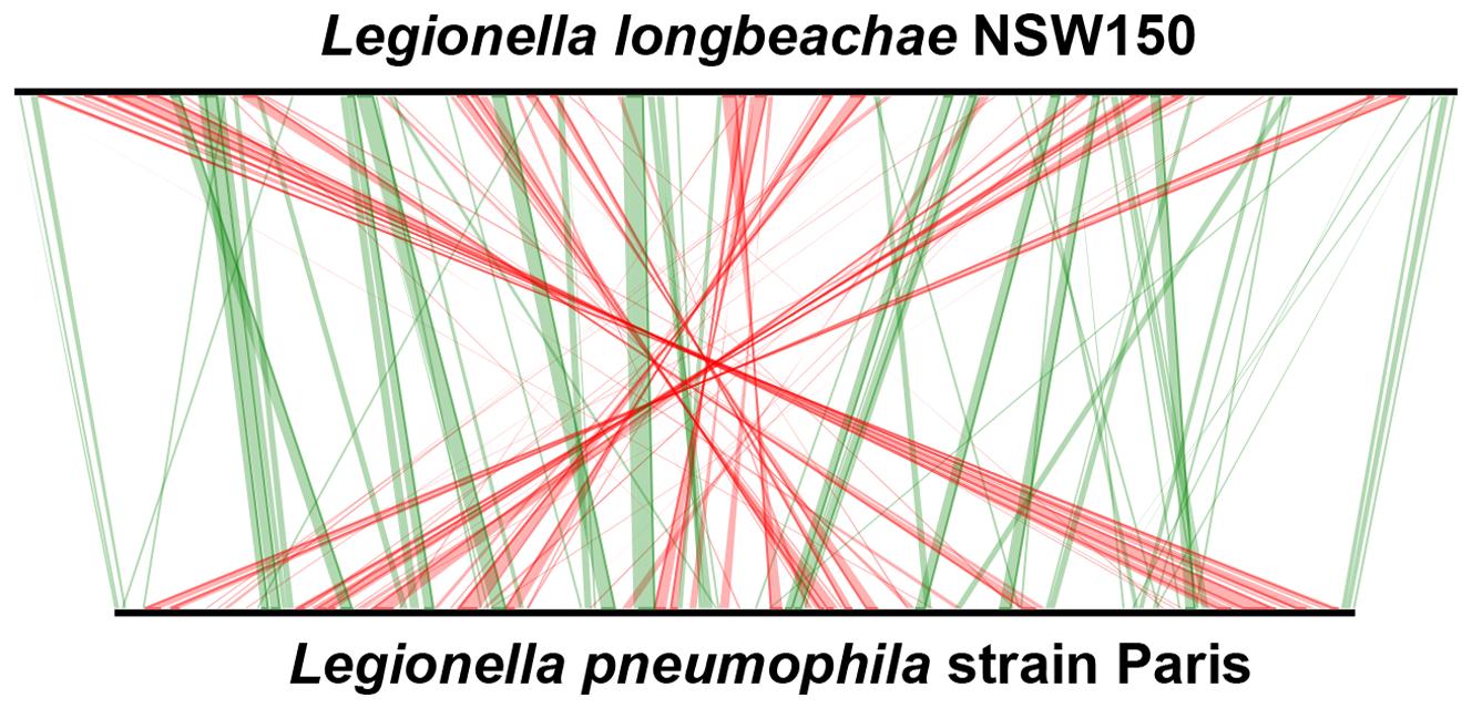 Whole-genome synteny map of <i>L.longbeachae</i> strain NSW150 and <i>L. pneumophila</i> strain Paris.