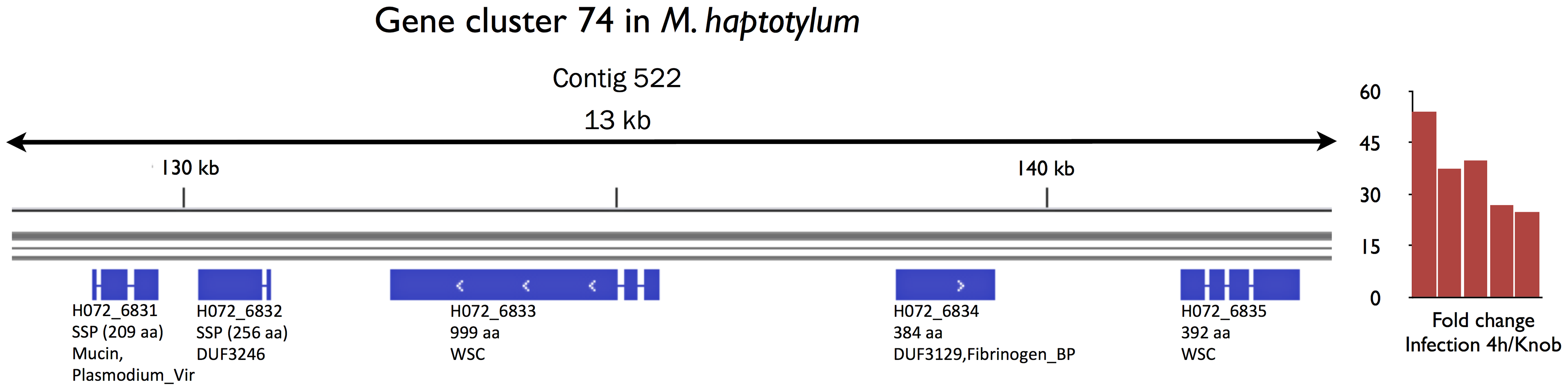 Gene cluster of secreted proteins in <i>M. haptotylum</i> that were highly expressed during nematode infection.
