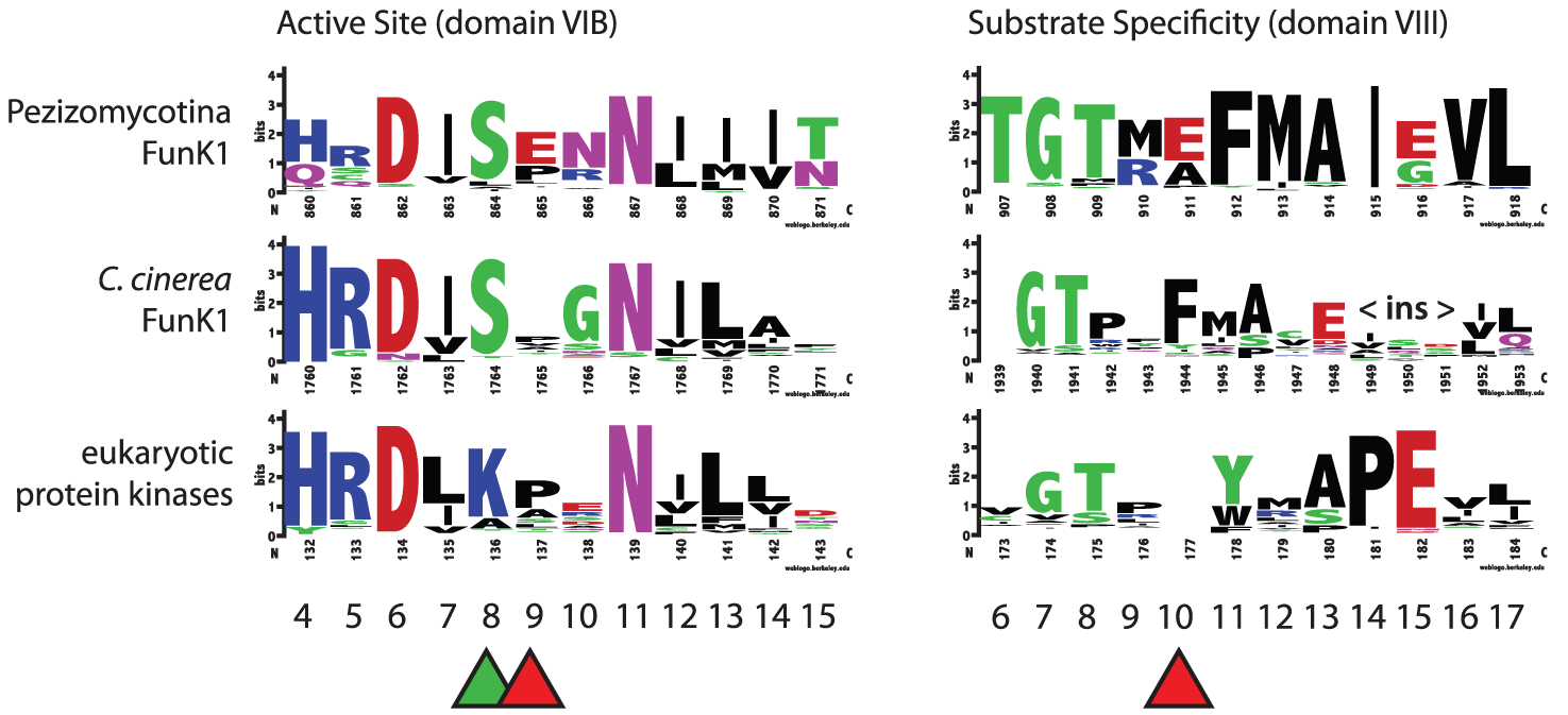 Conservation of FunK1 functional domains.