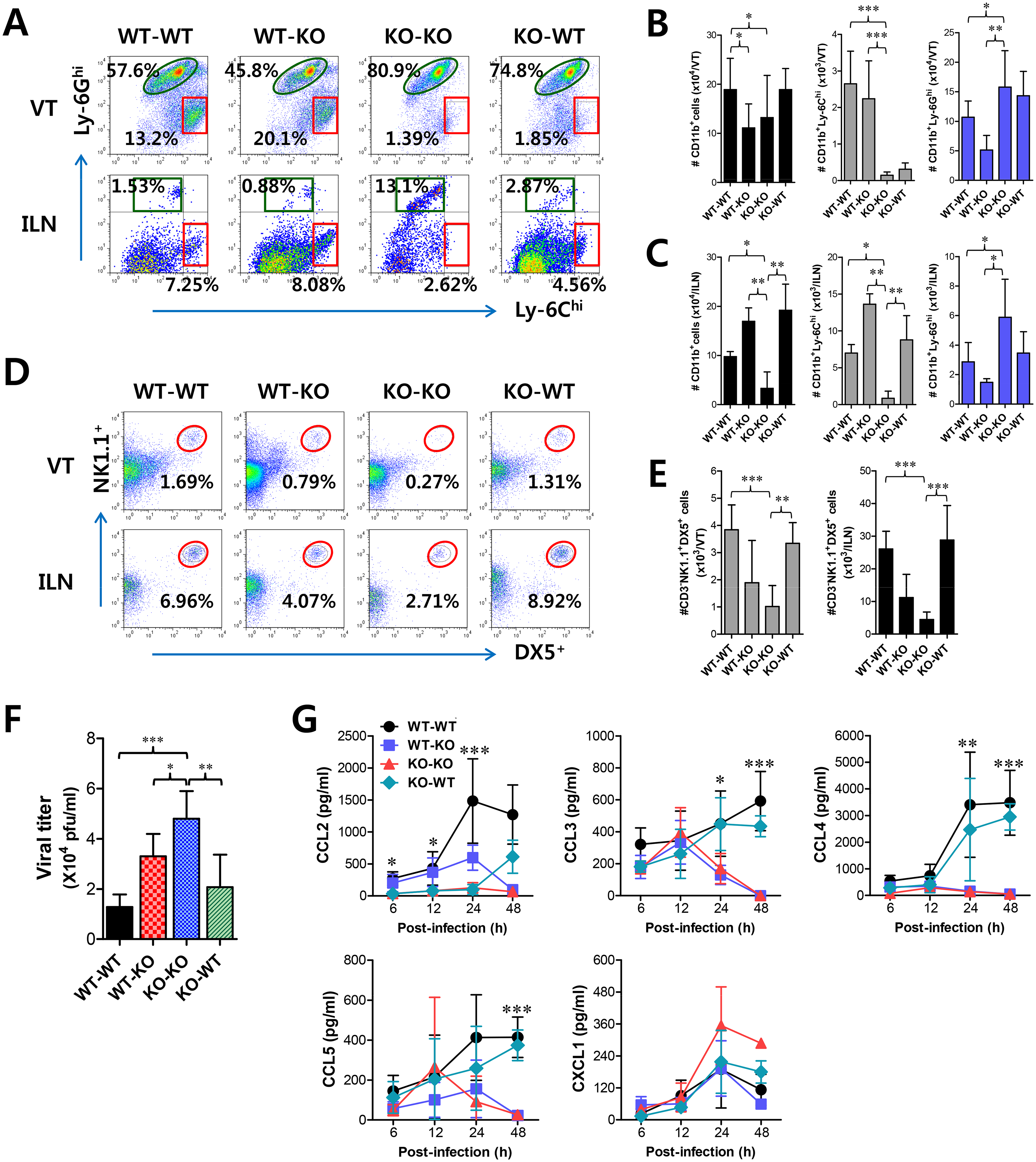 IFN-I signaling on infiltrated leukocytes derived from HSC lineage is required for normal recruitment of CD11b<sup>+</sup>Ly-6C<sup>hi</sup> monocytes, but not NK cells.