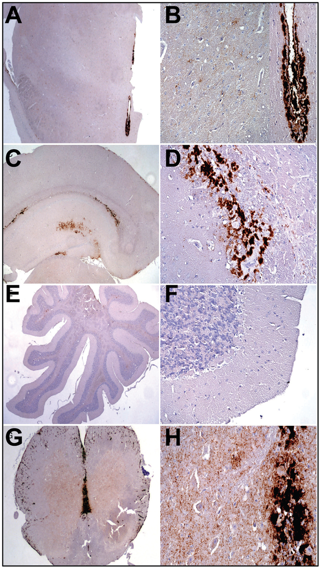 Analysis of PrP deposition in LOTSS-inoculated animals from the 2d passage.