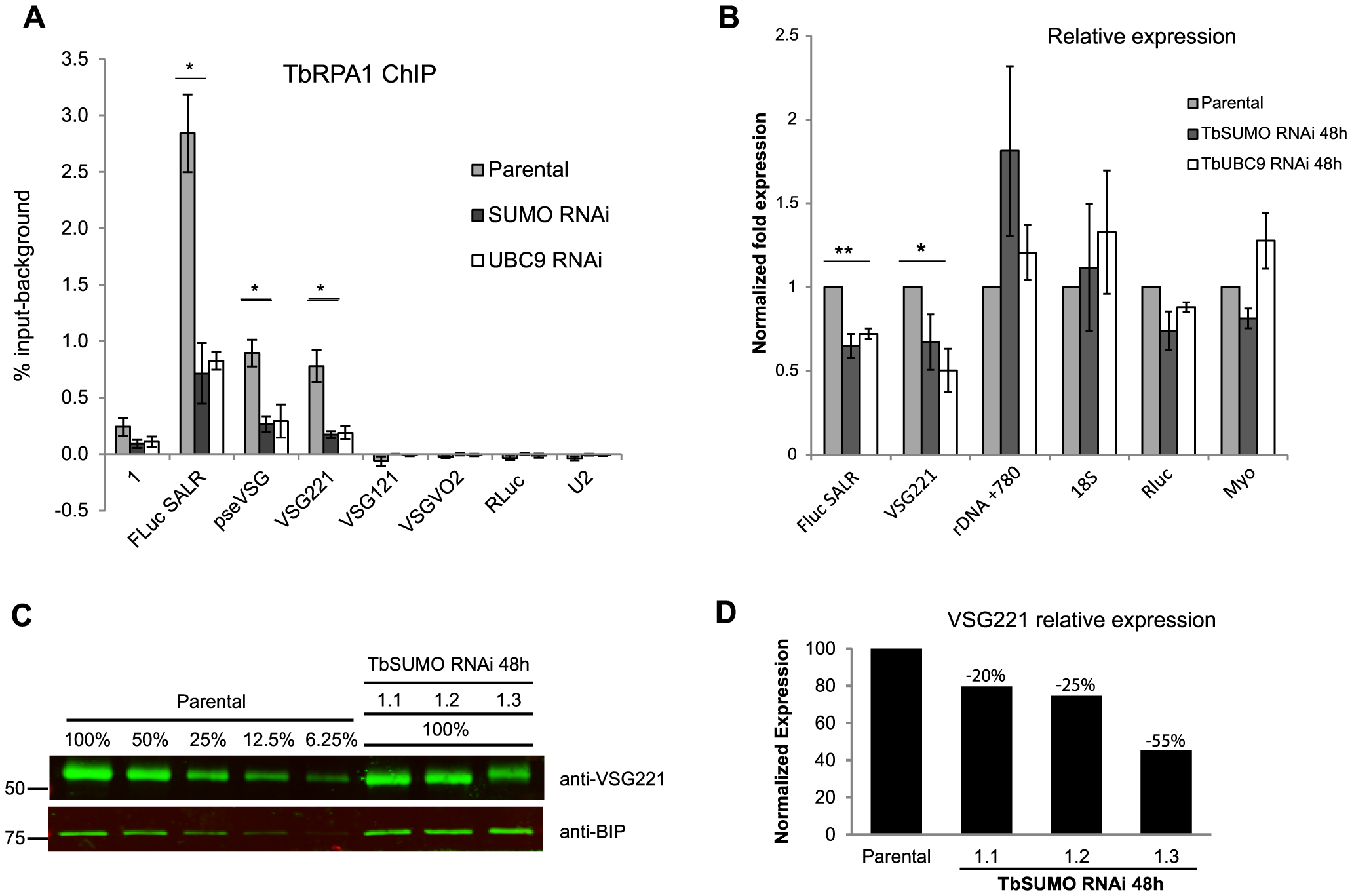 TbSUMO depletion results in reduction of VSG mRNA and protein.