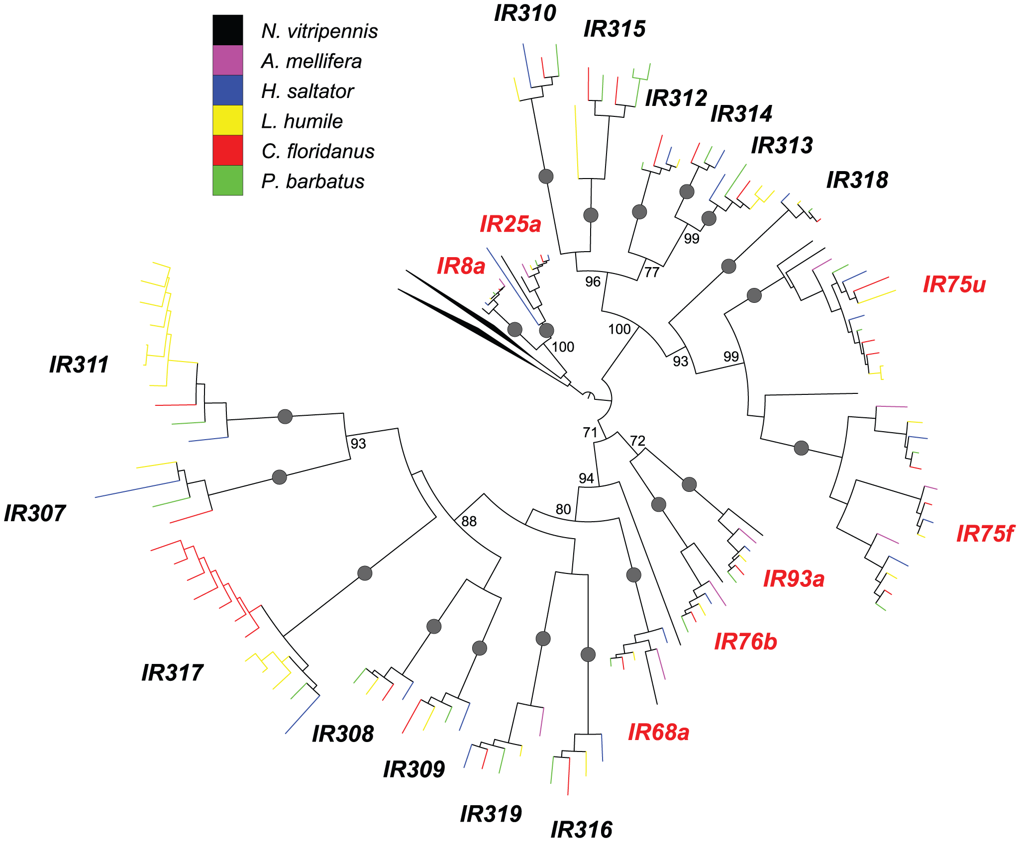 Phylogenetic relationships of Hymenoptera <i>Ir</i> genes.