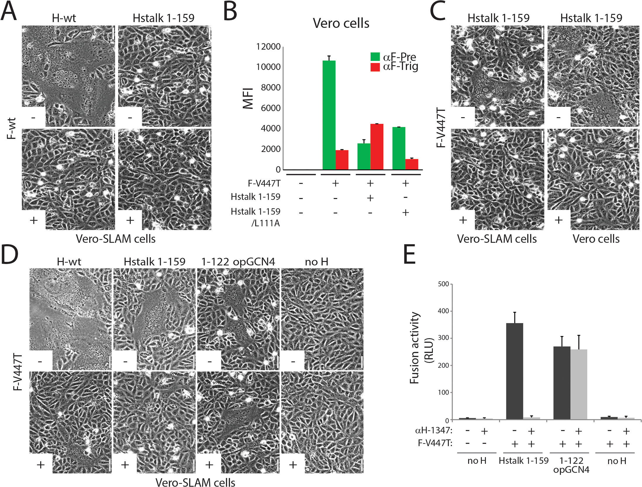 Inhibition of headless H/F-mediated membrane fusion by mAb αH-1347.