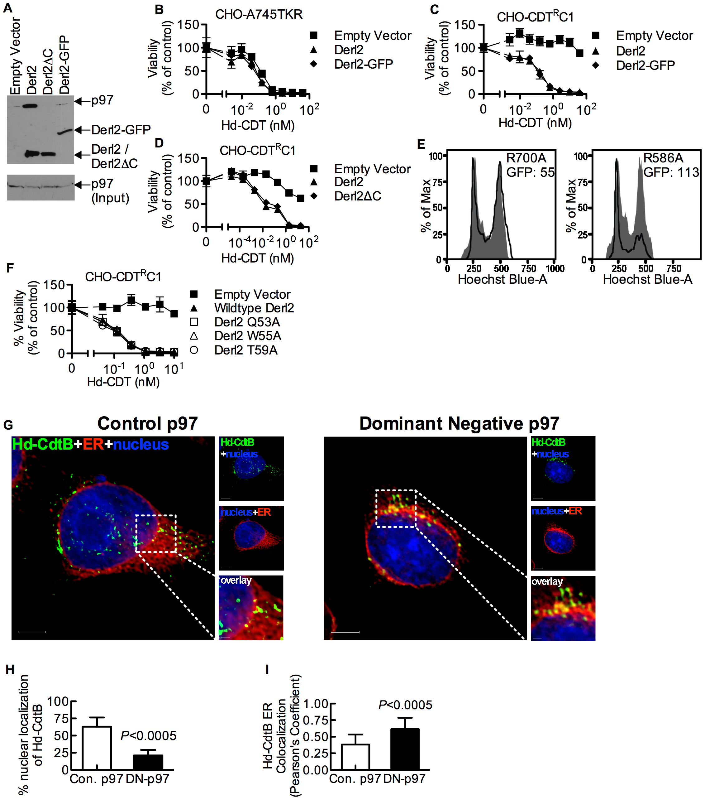 The interaction of Derl2 and p97 is not required for CDT intoxication.