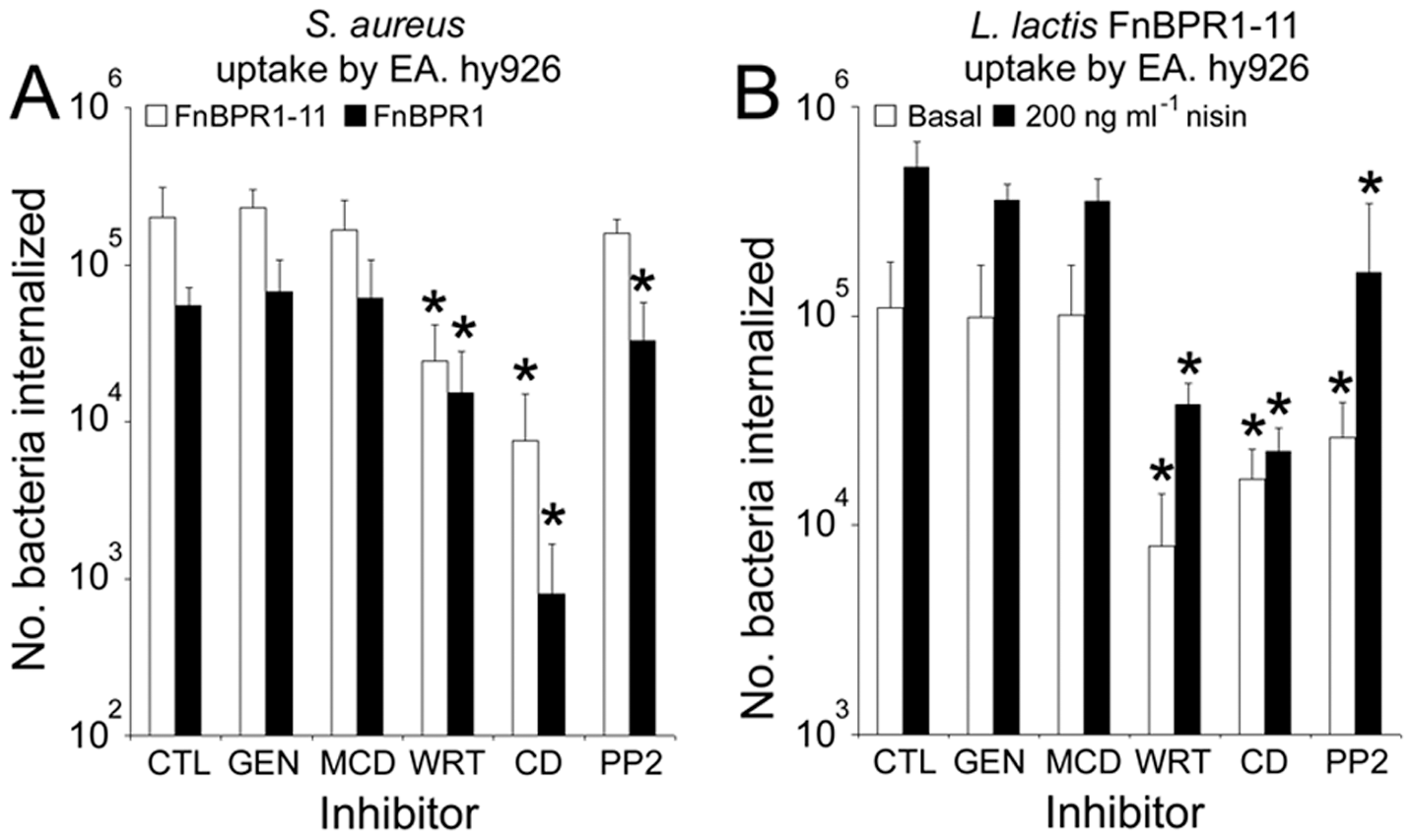 The mechanism of bacterial uptake is unaffected by FnBPA composition or expression level.