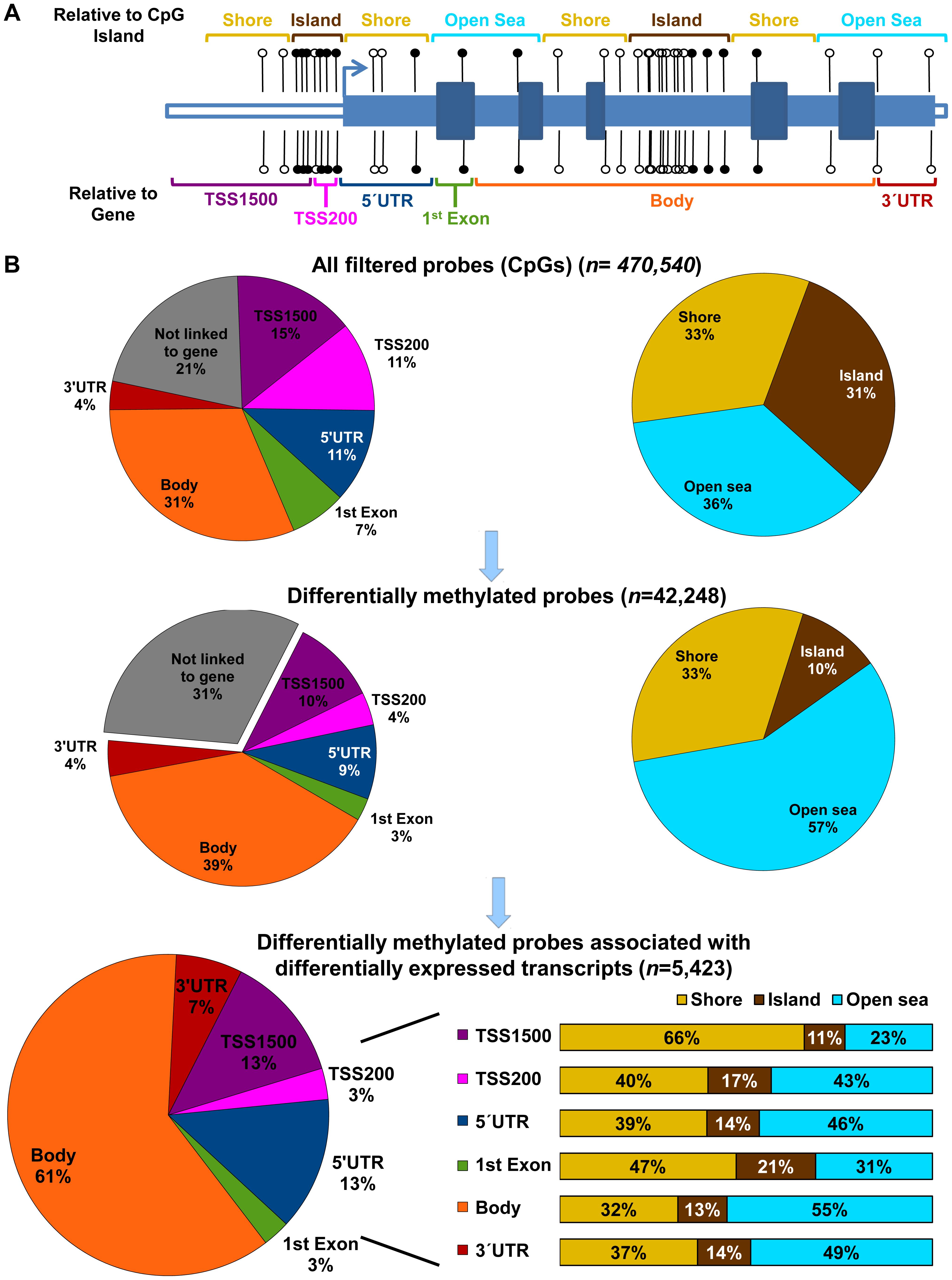 Genomic context of CpG methylation.