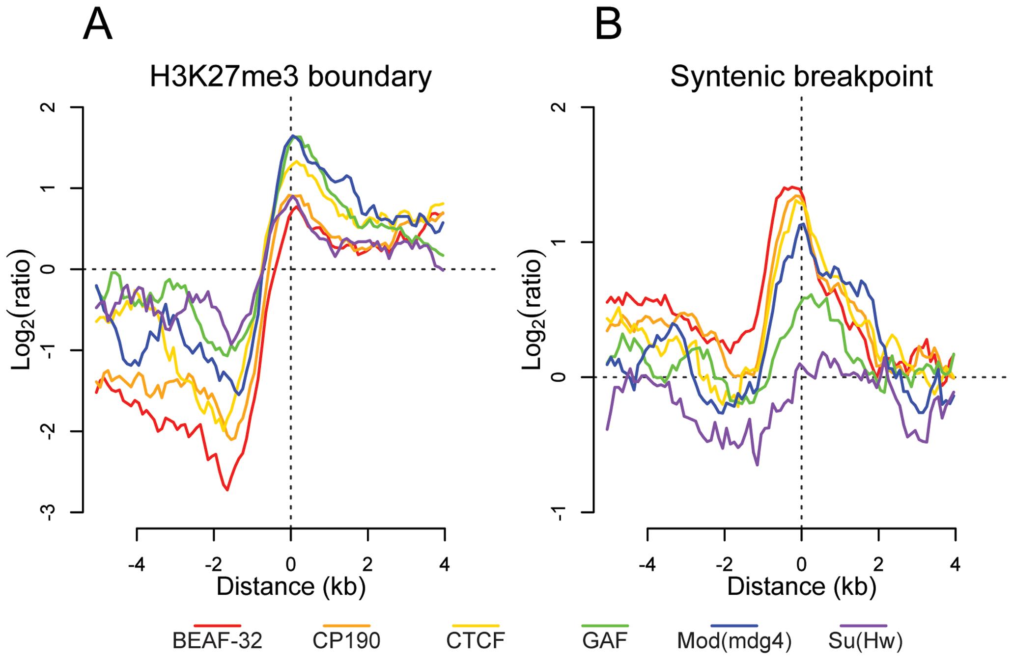Insulator proteins mark chromatin and syntenic block boundaries.