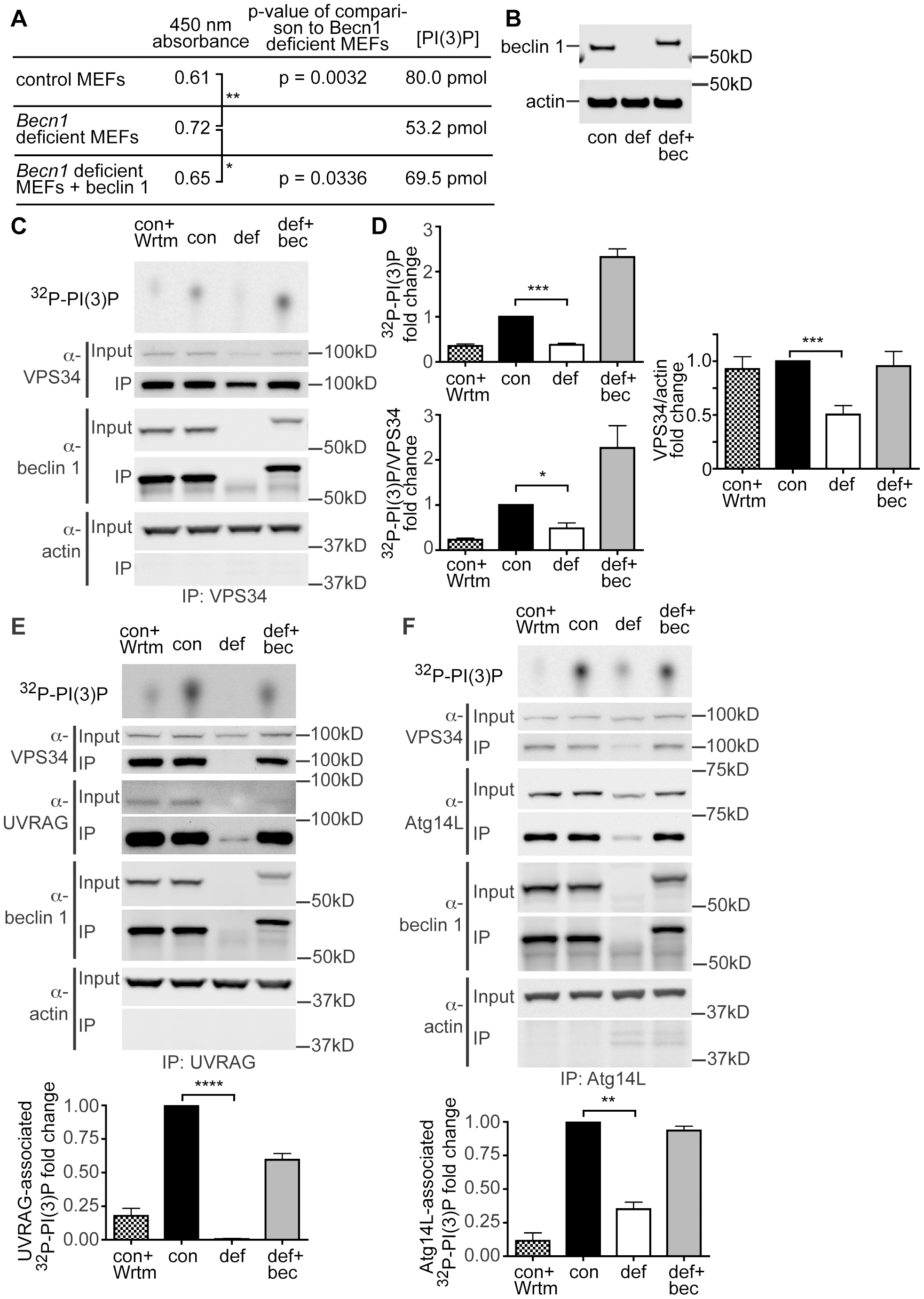 PI(3)P and VPS34 lipid kinase activity is decreased in <i>Becn1</i> deficient MEFs.