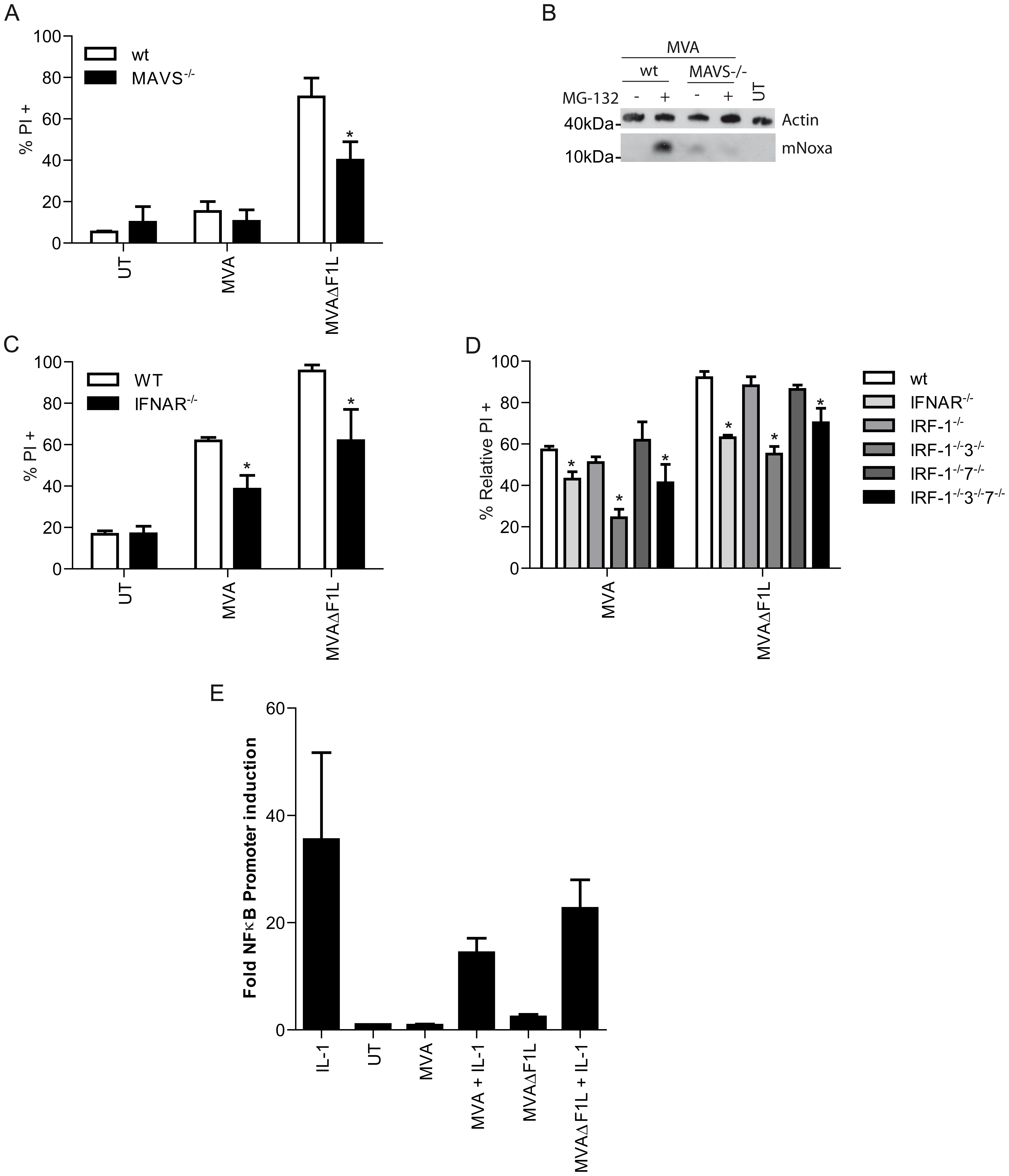 IRF3 induced activation of Noxa is dependent on MAVS and IFN-I-signaling.