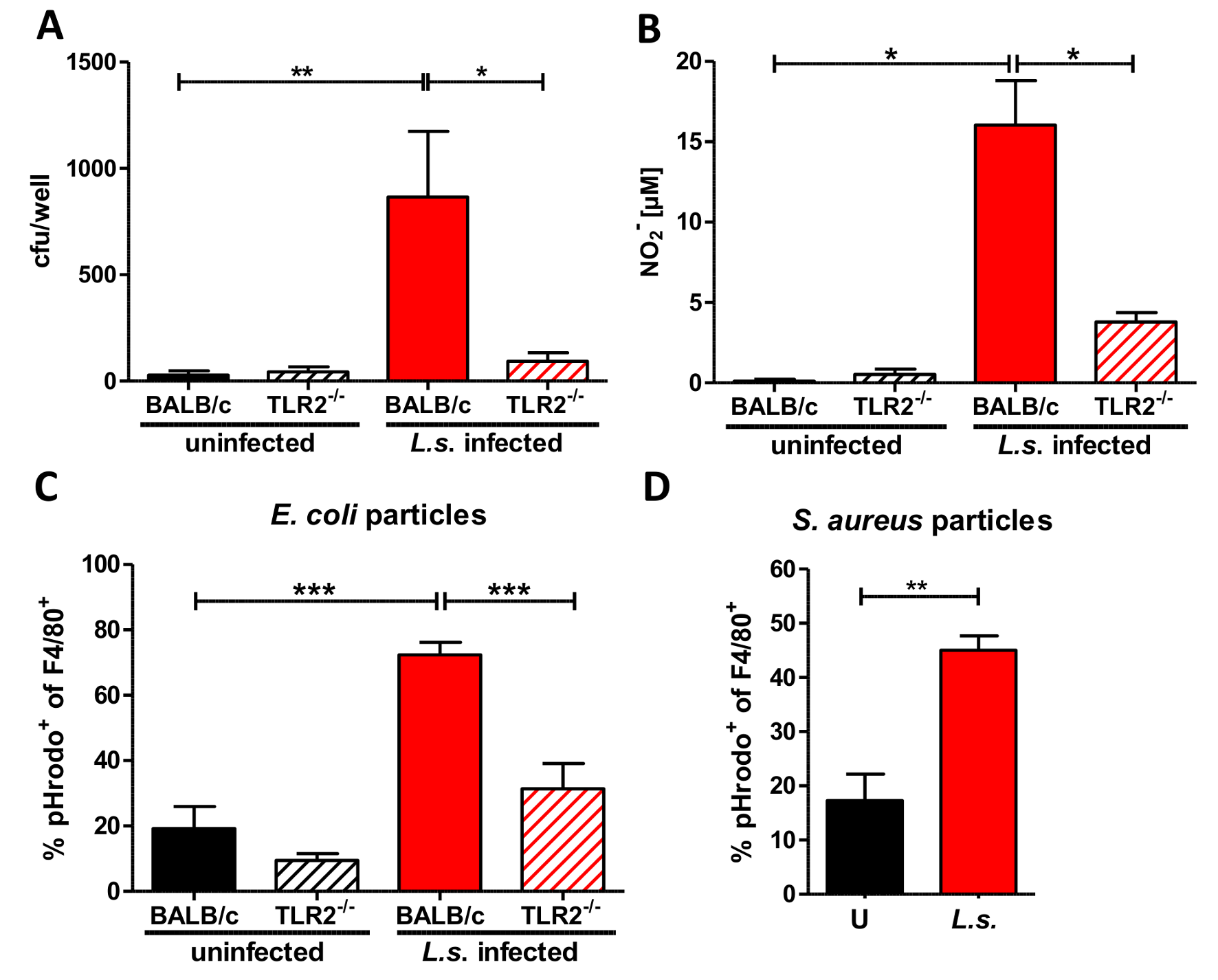 Anti-bacterial effector mechanisms are enhanced by <i>L. sigmodontis</i> infection in a TLR2 dependent manner.