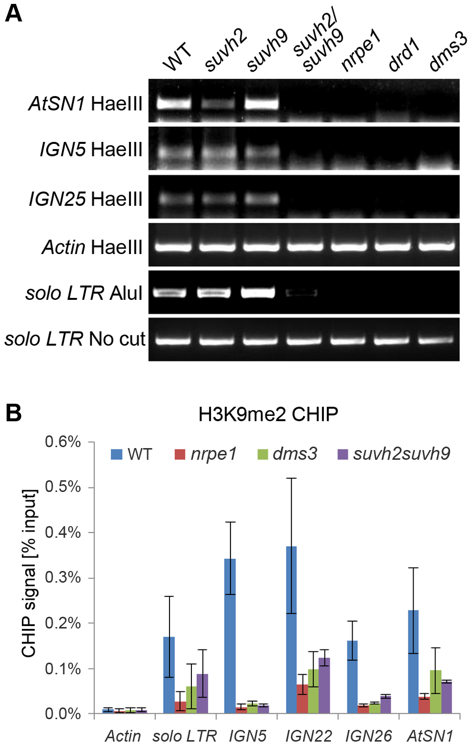 Effect of <i>suvh2</i> and <i>suvh9</i> on DNA methylation and histone H3K9me2 at RdDM targets.