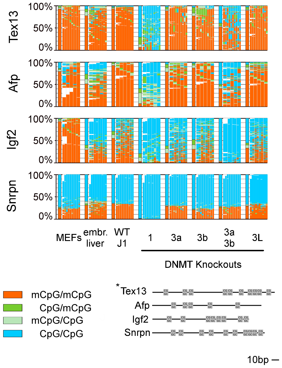 Methylation pattern of 4 single copy genes in WT ESCs, embryonic liver, and MEFs and in Dnmt KO ESCs.