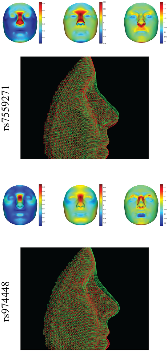 Full facial effects of two different loci in <i>PAX3</i>, rs7559271 (top) [<em class=&quot;ref&quot;>5</em>], and rs974448 (bottom) [<em class=&quot;ref&quot;>4</em>].