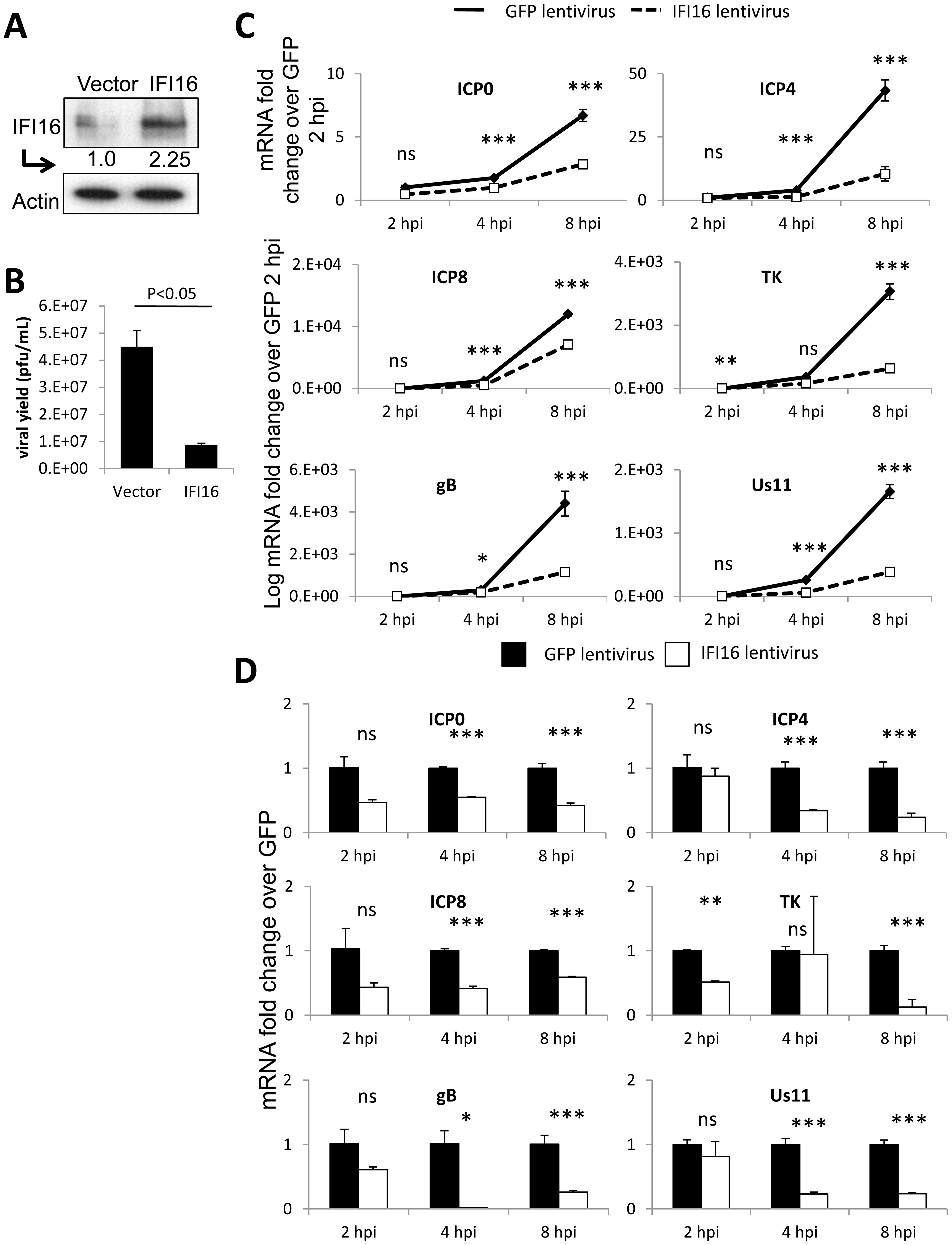 Effect of IFI16 overexpression on HSV-1 gene expression, replication and viral yield in U2OS cells.