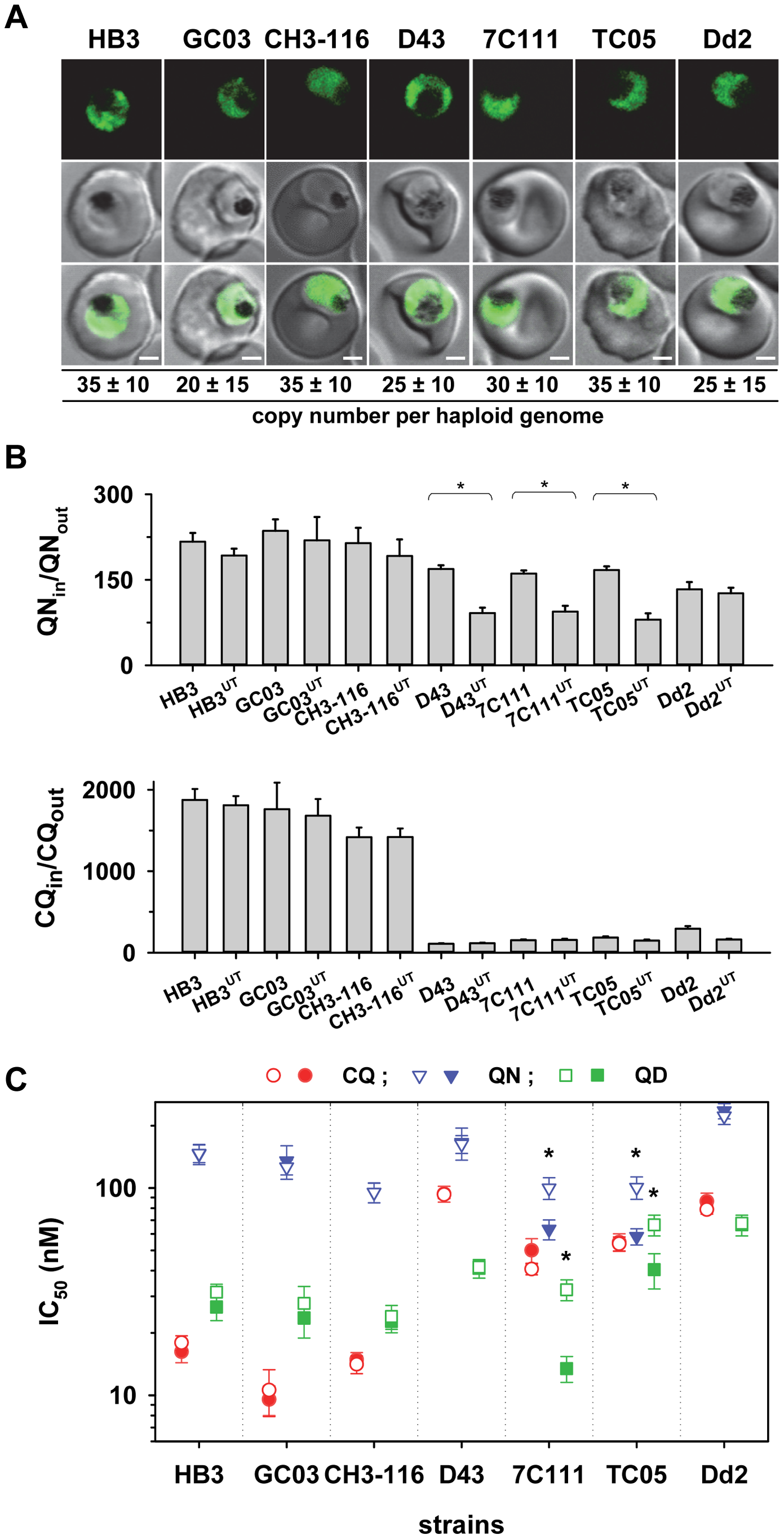 Overexpression of the HECT domain of PfUT confers quinine and quinidine response variations in appropriate genetic backgrounds.