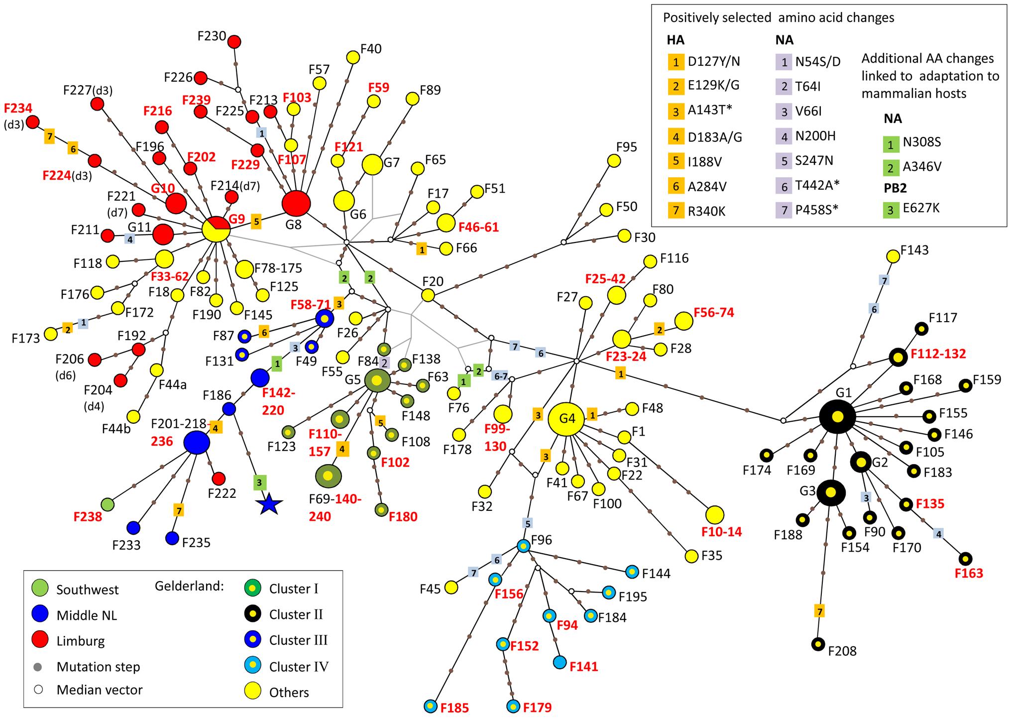 Median-joining phylogenetic network of H7N7 viruses.