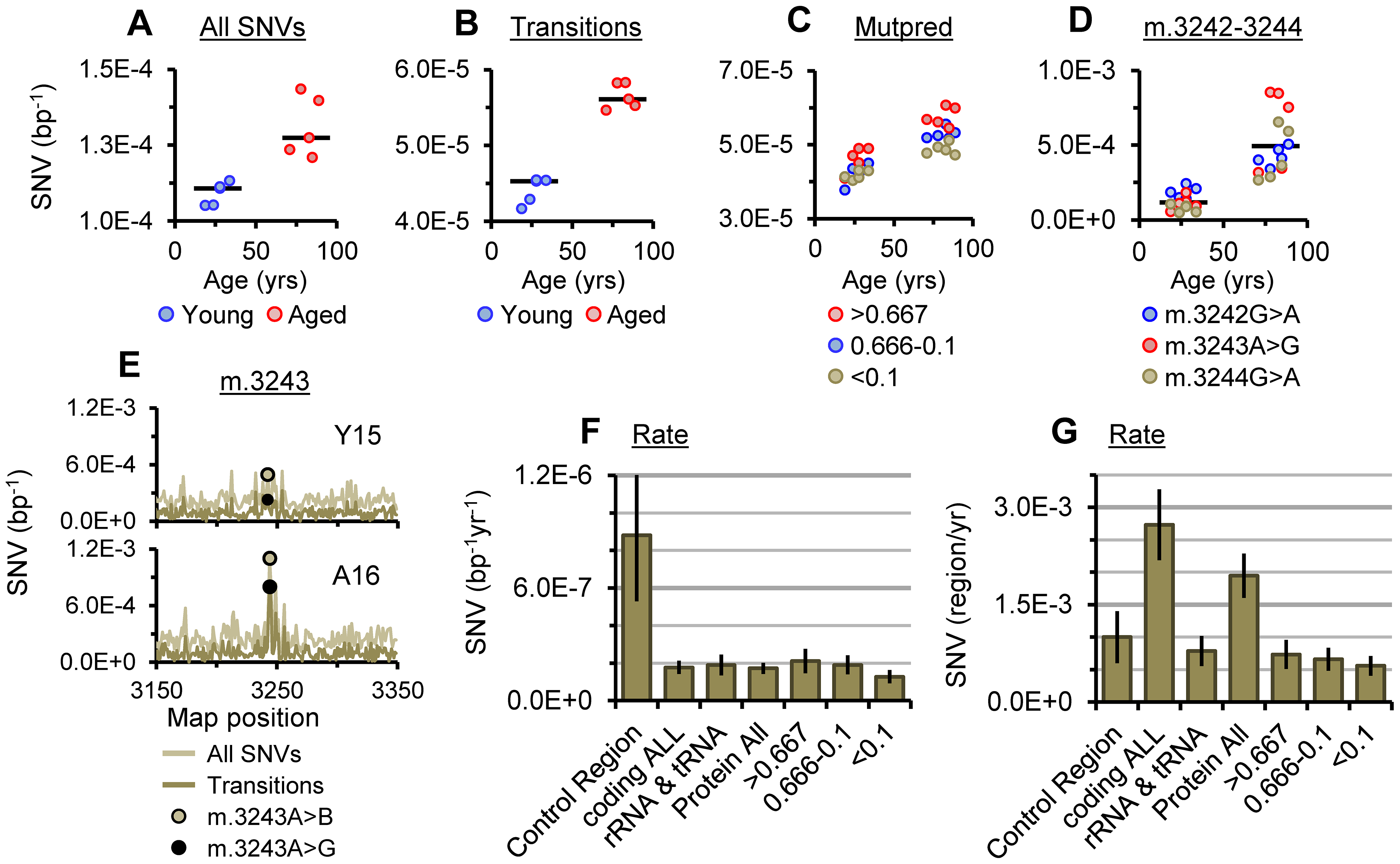 SNV burden of putamen mtDNA.