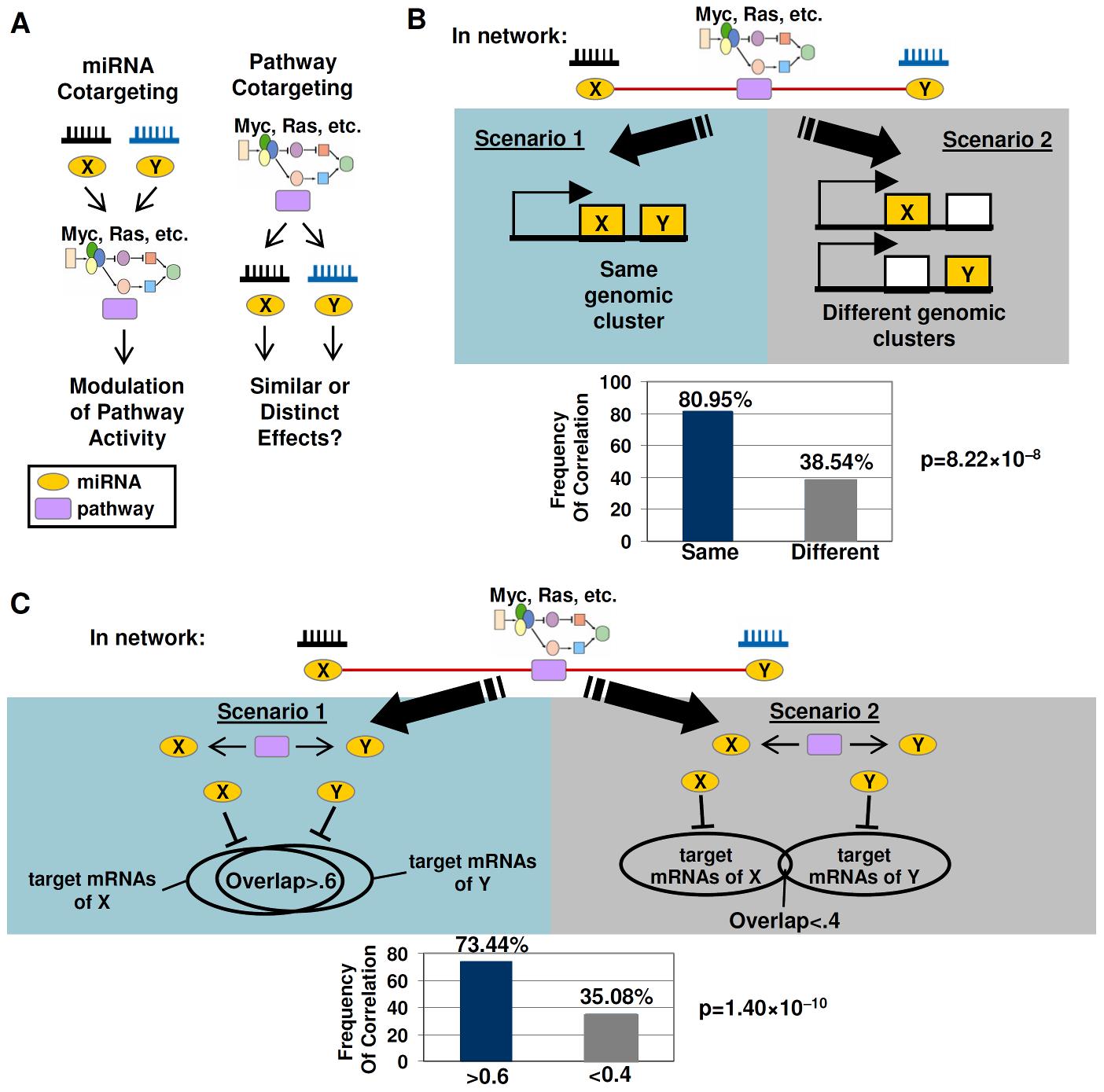 Cotargeting of miRNAs by oncogenic signaling pathways.