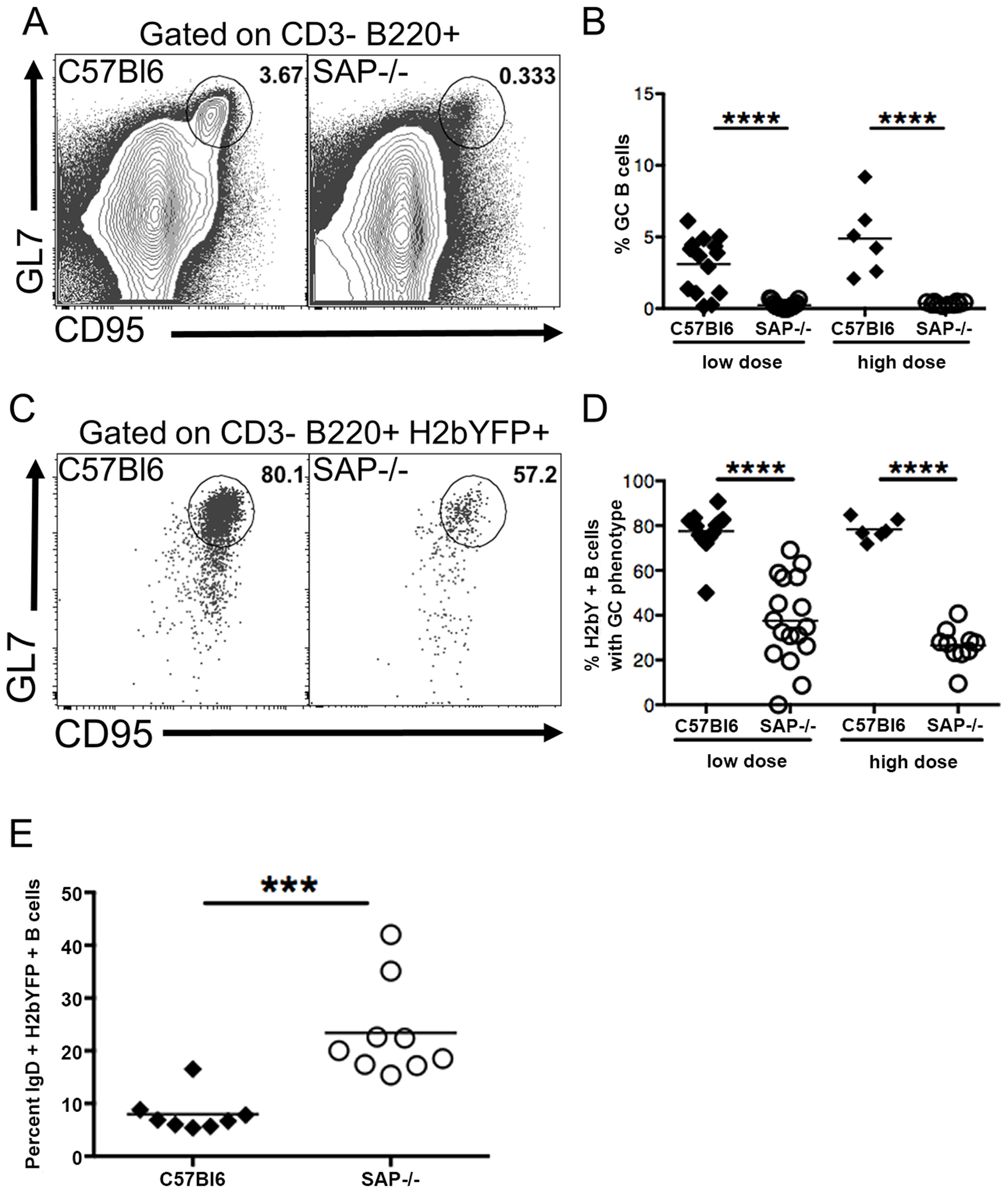 Reduced germinal center response in SAP-deficient mice.