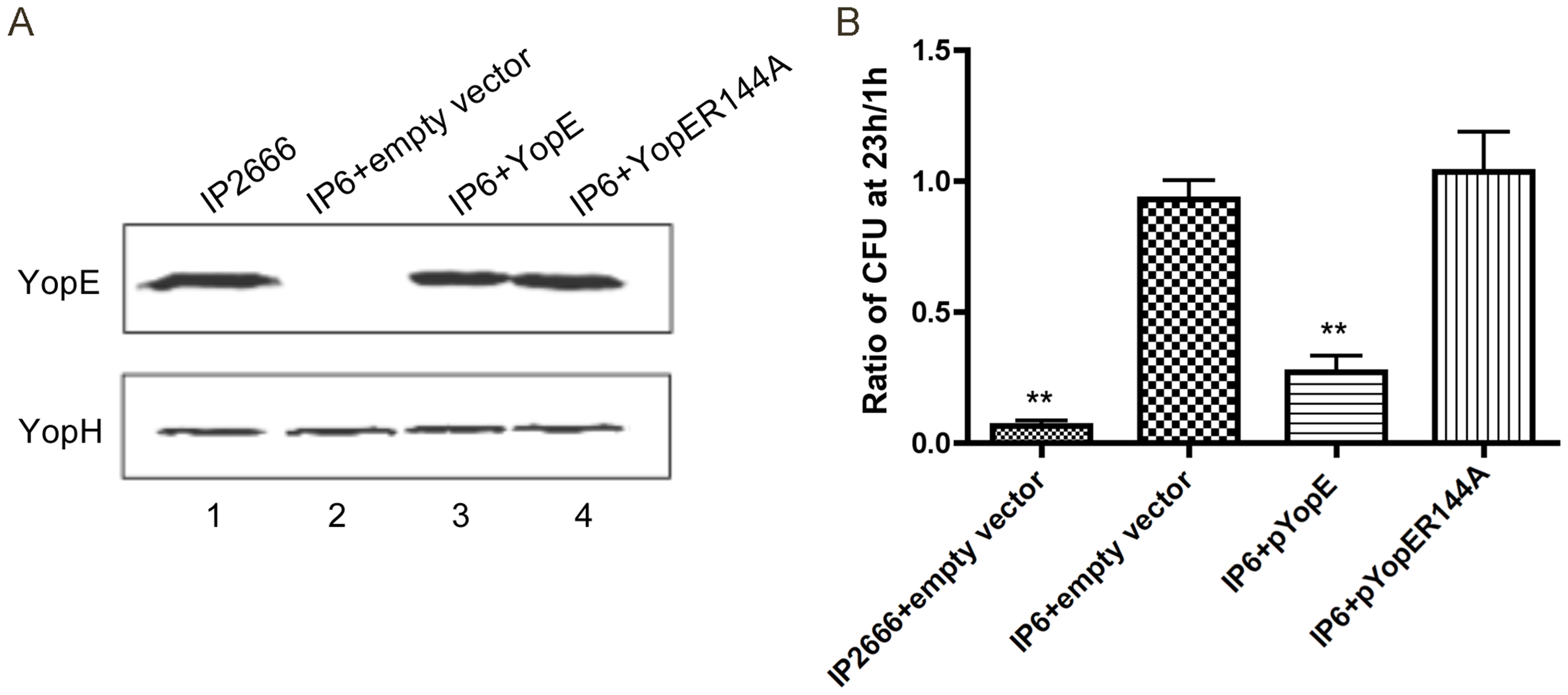 Measurement of YopE production and survival in macrophages by different <i>Y. pseudotuberculosis</i> strains.