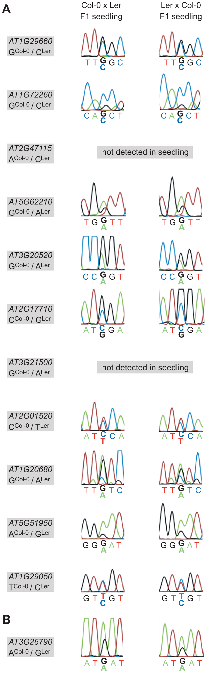 Allele-specific expression analysis of confirmed MEGs and the PEG in hybrid F1 seedlings.