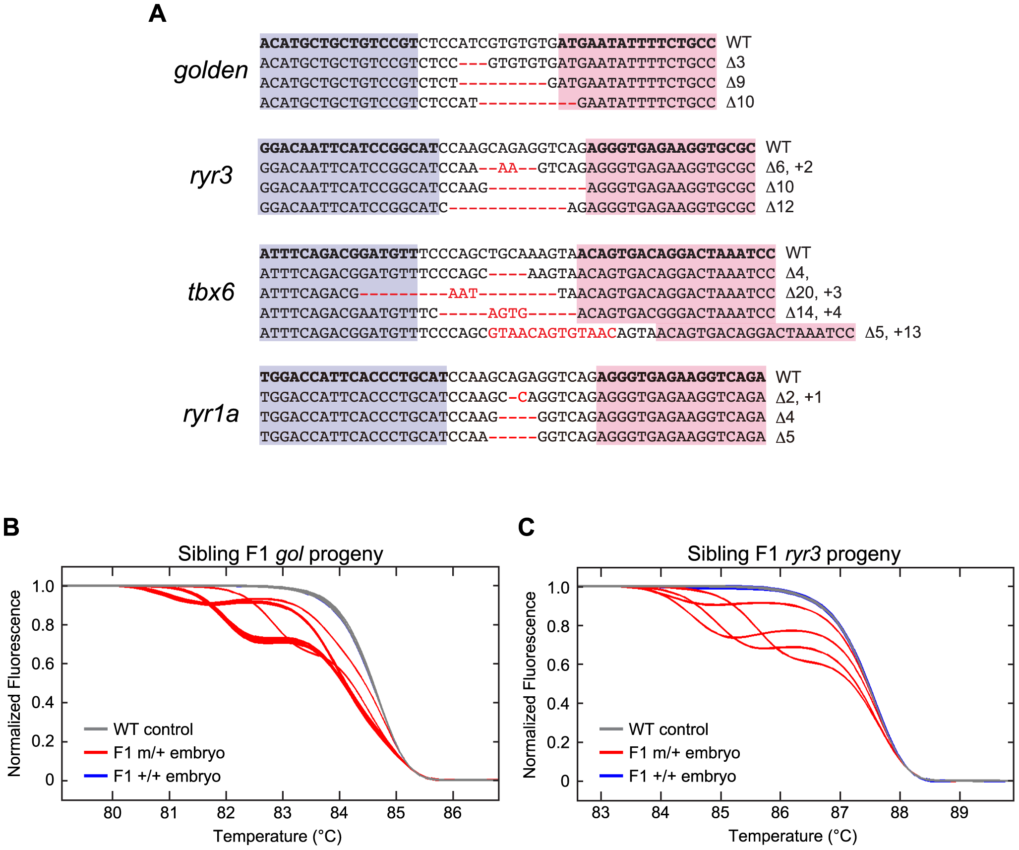 Induction of germ line mutations with TALENs.
