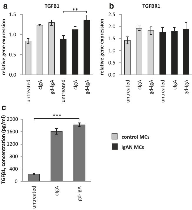 Gene expression of TGFB1 and TGFBR1 and release of TGFβ1. Mesangial cells (MCs) from patients with IgA nephropathy (IgAN) and controls were stimulated with IgA1 purified from blood from healthy controls (cIgA) or patients with IgAN (gd-IgA) or medium only for 6 h and the gene expression was investigated. Stimulation of control MCs and IgAN MCs with gd-IgA gave a significant increase in the gene expression of TGFB1 (gene coding for TGFβ1) (a). The gene expression for TGFBR1 (gene coding for TGF-beta receptor type-1) was not significantly affected by any of the treatments (b). IgAN MCs were stimulated with either cIgA or gd-IgA for 6 h and the release of TGFβ1into the cell culture medium was investigated. Both treatment with cIgA and gd-IgA resulted in an increased release of TGFβ1 compared to untreated cells (c). <i>Grey bars</i> represent control MCs, <i>black bars</i> represent IgAN MCs * <i>P</i> < 0.05, ** <i>P</i> < 0.01, ***<i>P</i> < 0.001, error bars represent SEM