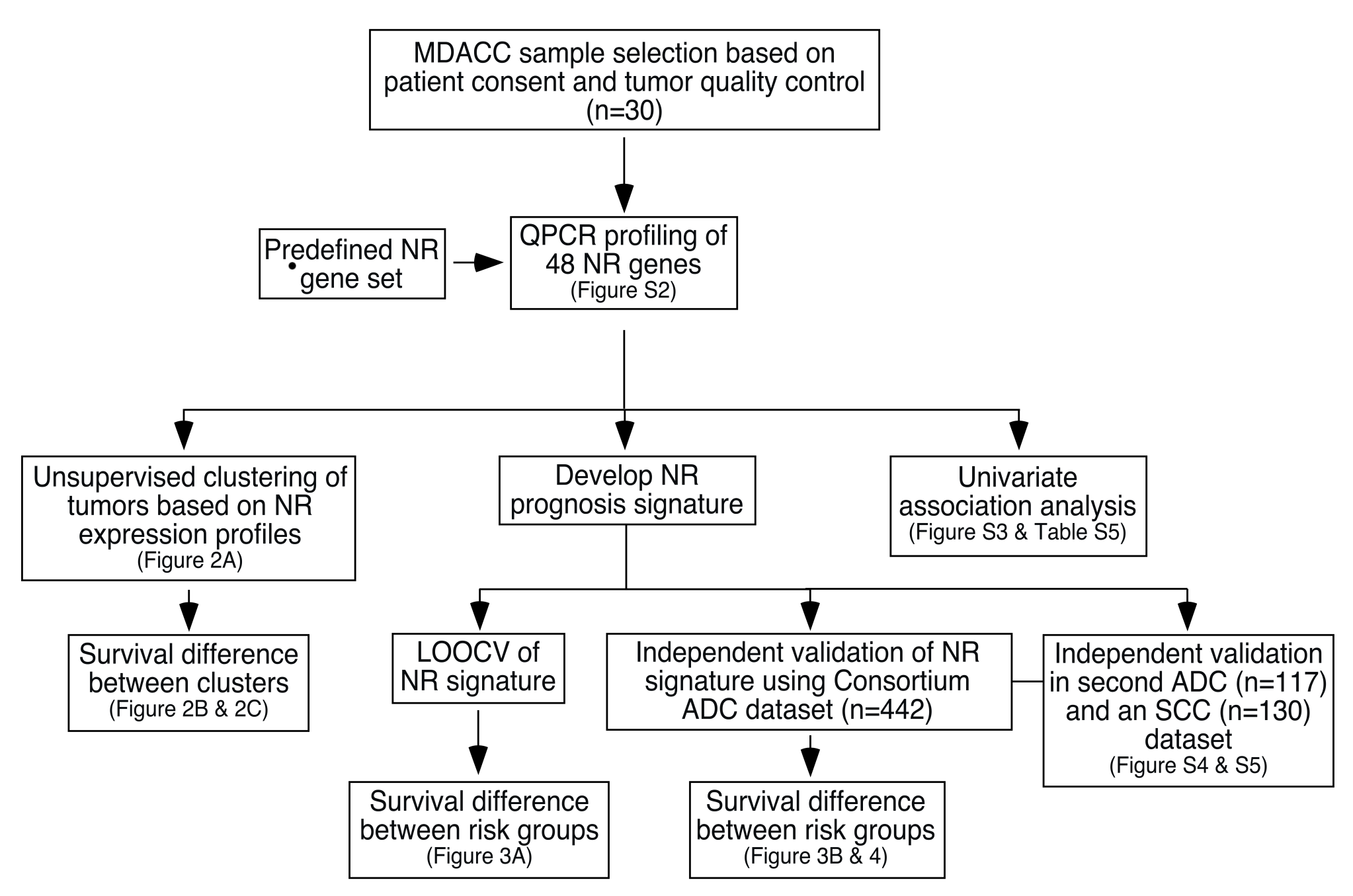 Schematic of the study design for development and validation of the NR prognostic gene signature.