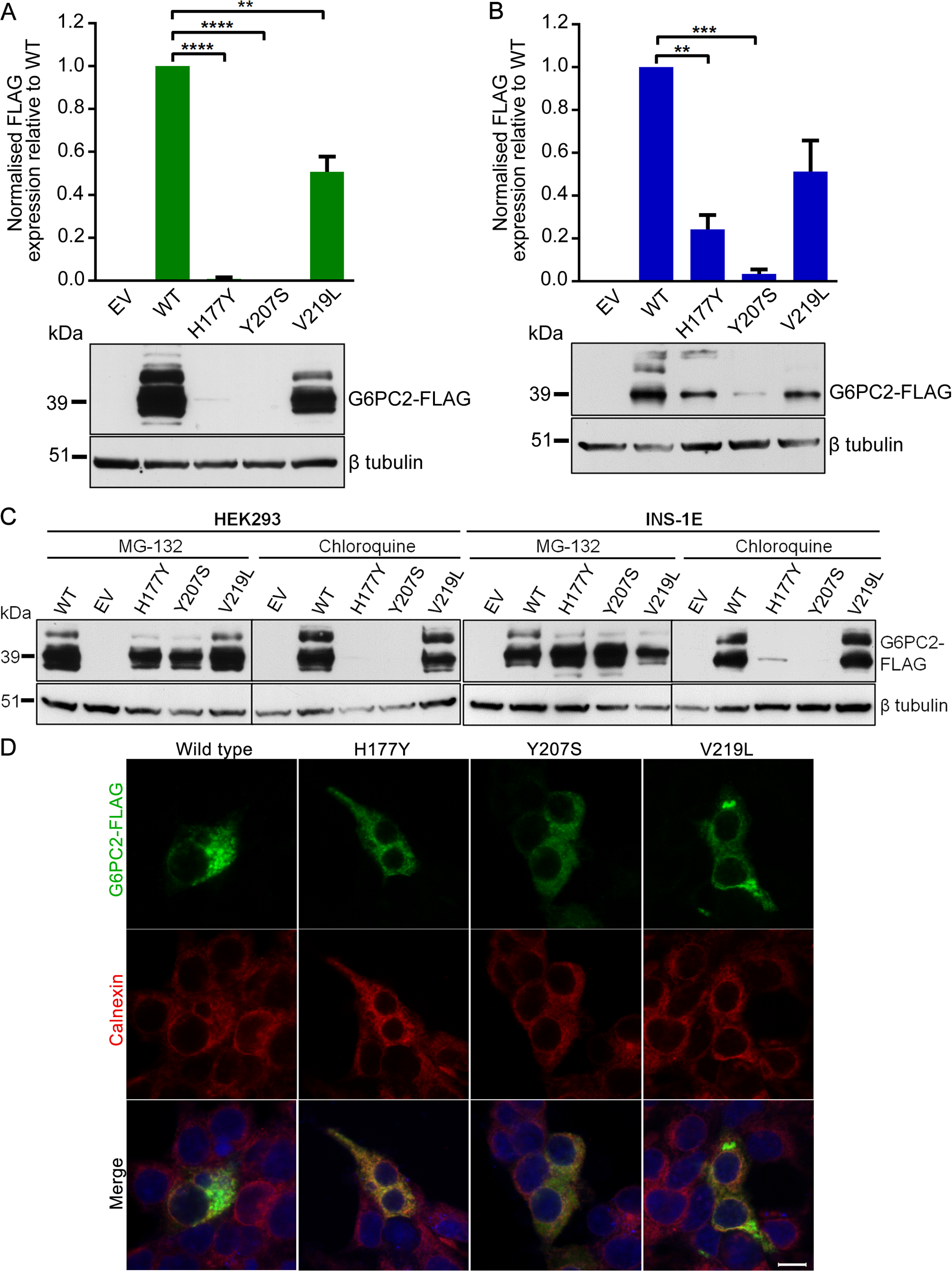 Functional characterization of wild type and variant G6PC2 proteins.