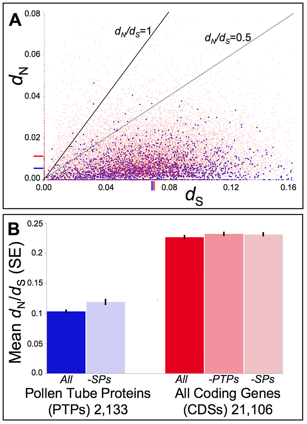 Distribution of pairwise non-synonymous (<i>d</i><sub>N</sub>) and synonymous (<i>d</i><sub>S</sub>) nucleotide substitutions as well as their ratio (<i>d</i><sub>N</sub>/<i>d</i><sub>S</sub>, or ω) among <i>Mimulus</i> pollen tube proteins (PTPs) and coding sequences (CDSs) genome-wide.