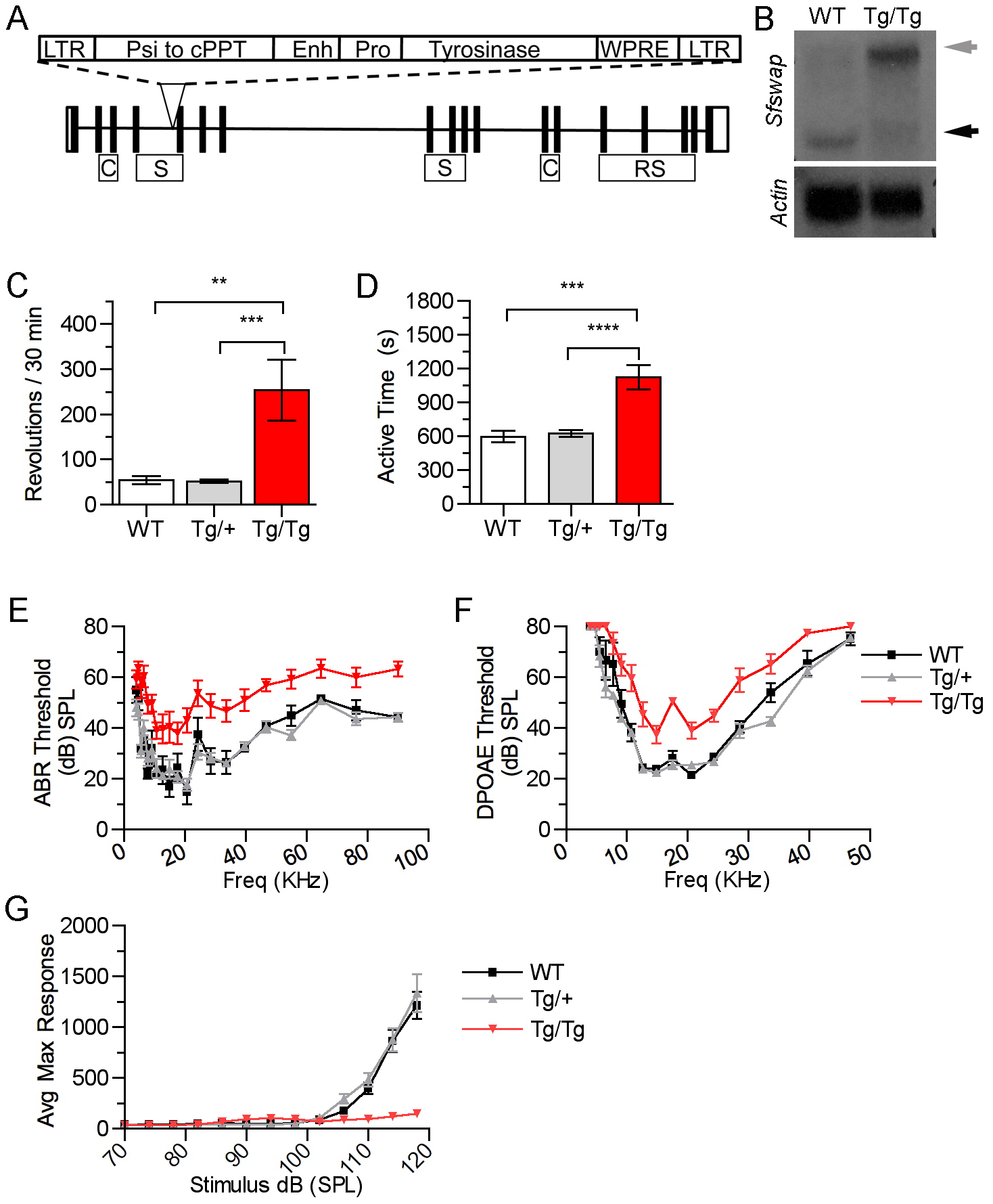 Mutation of <i>Sfswap</i> results in mice with vestibular and cochlear defects.