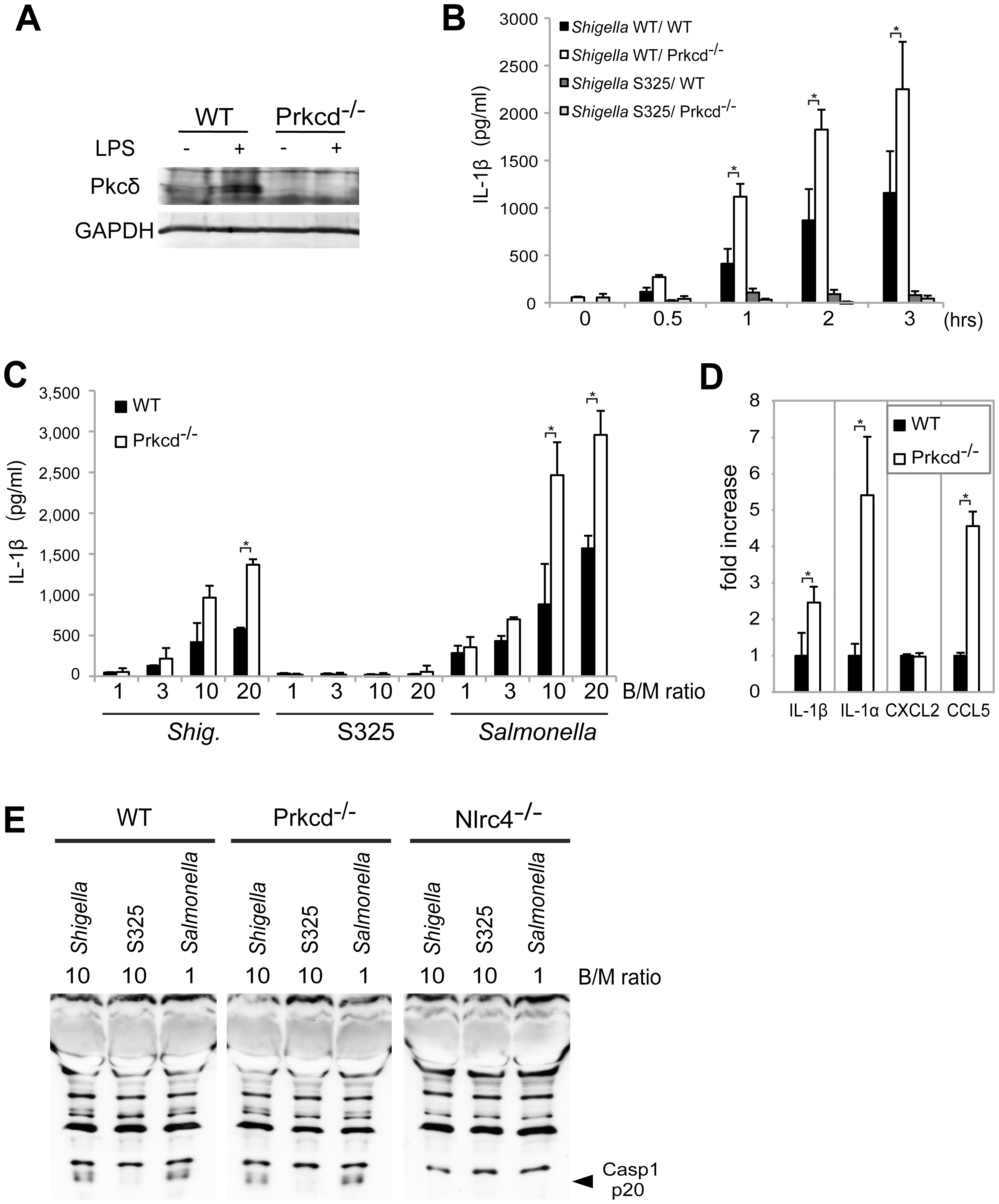 Pkcδ is not required for inflammasome activation caused by <i>Shigella</i> infection.
