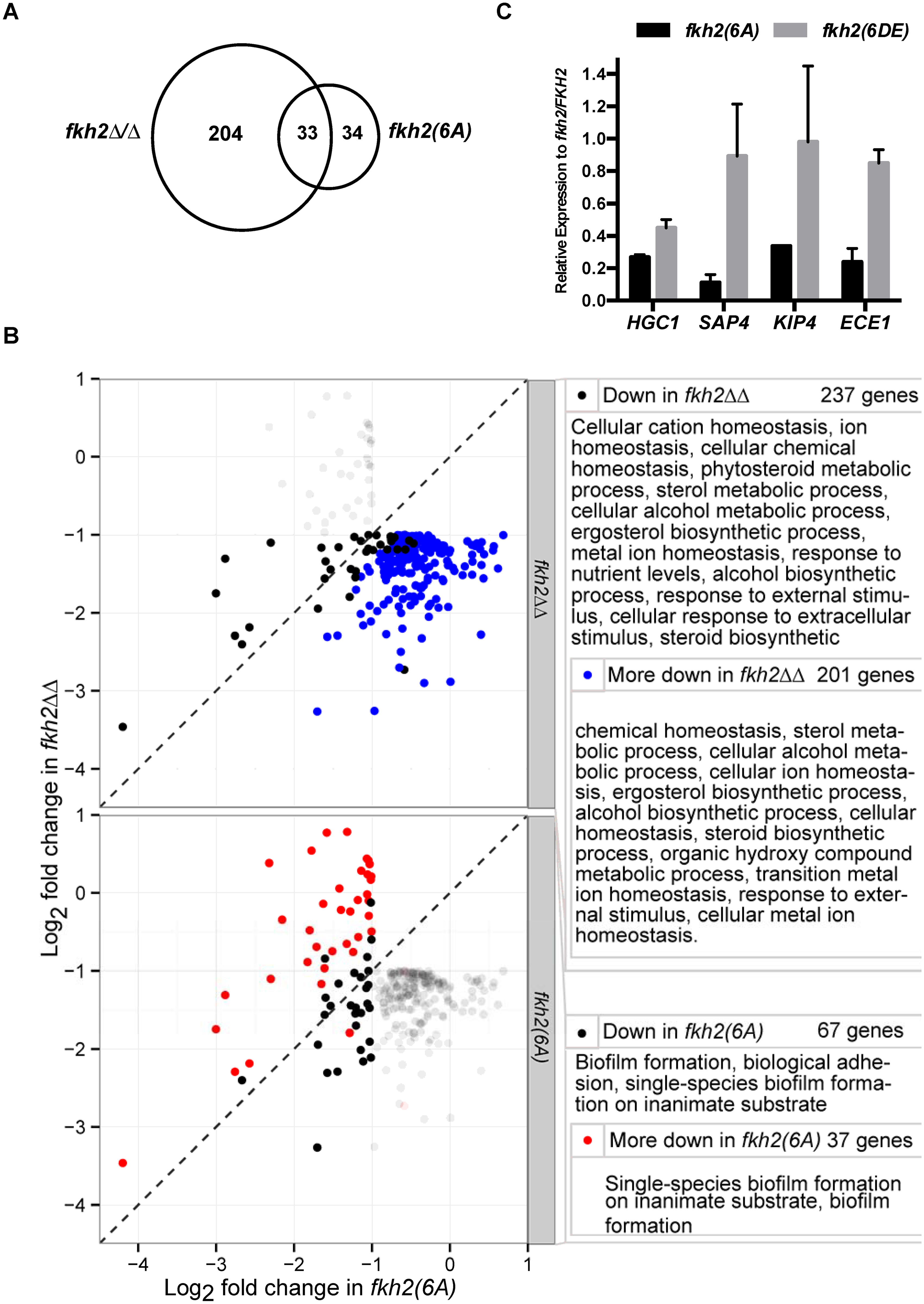 GO analysis of <i>fkh2(6A)</i> and <i>fkh2ΔΔ</i> mutants.
