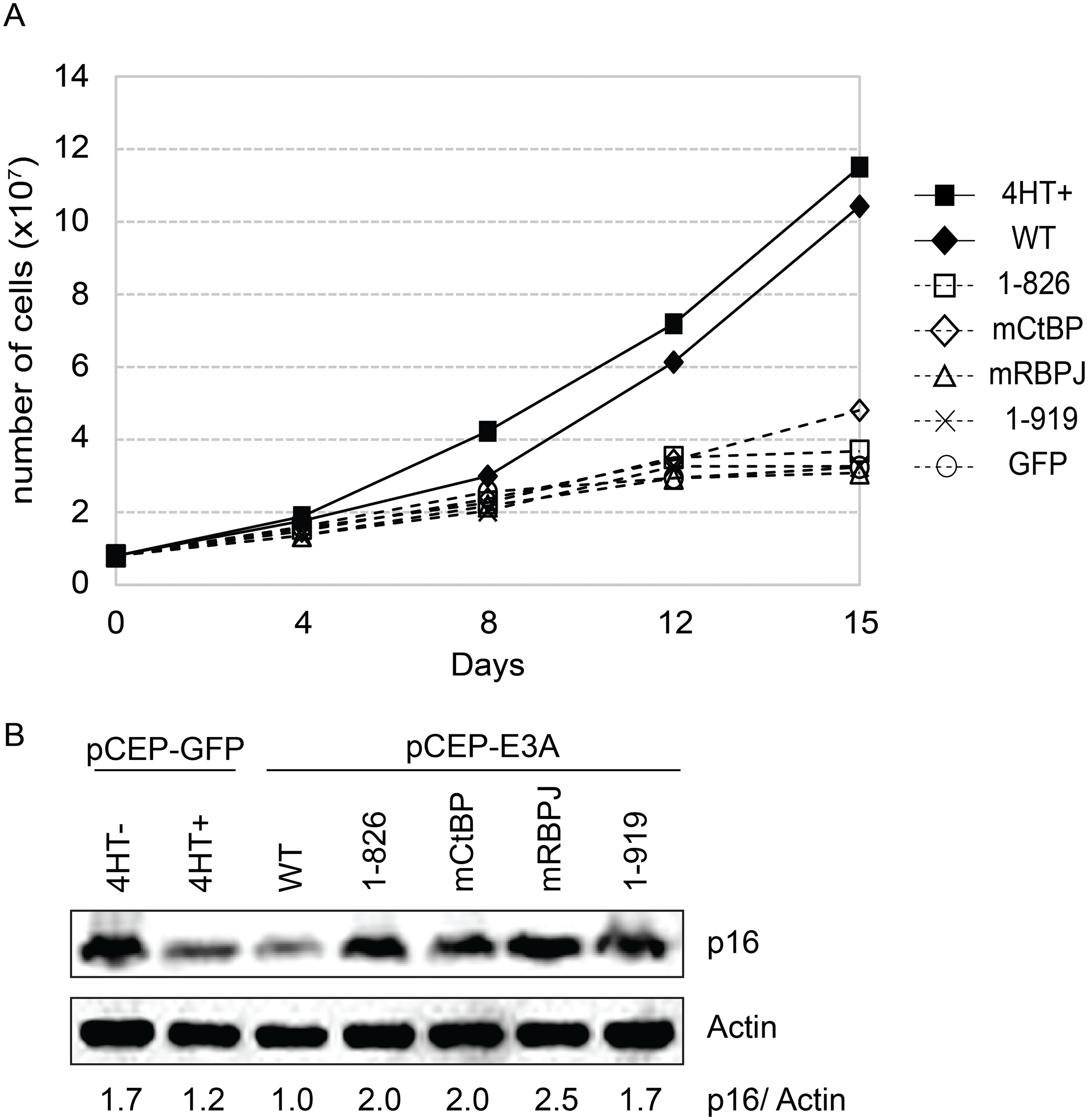 EBNA3A1-919, which associates with CtBP1 but not WDR48, is impaired for LCL growth maintenance.