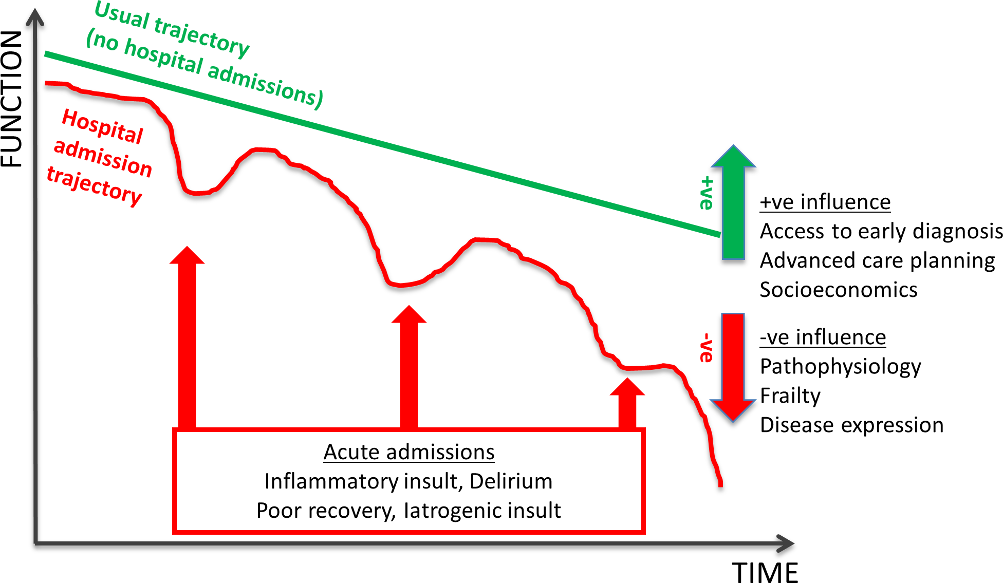 Schematic representation of dementia disease trajectory over time influenced by hospital admission.