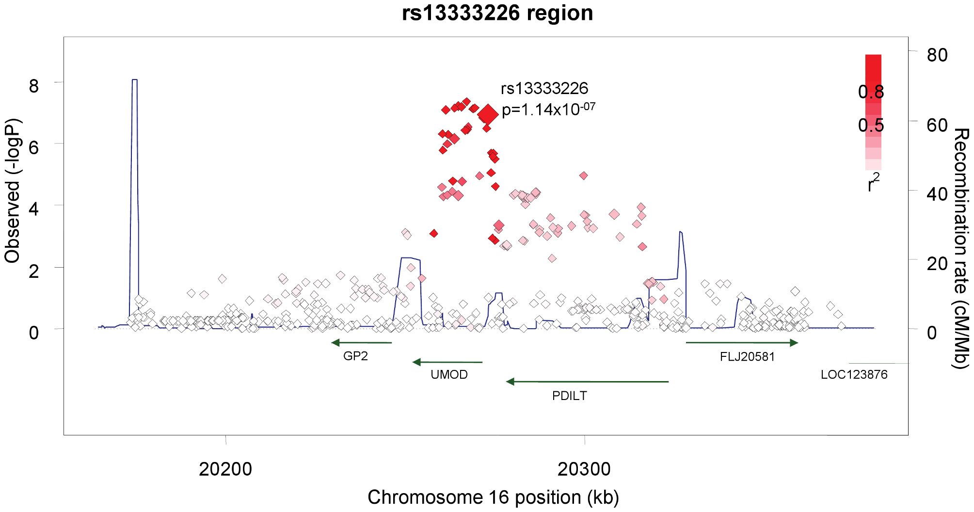 Association plot of the genomic region around rs13333226 showing both typed and imputed SNPs with location of genes and recombination rate.