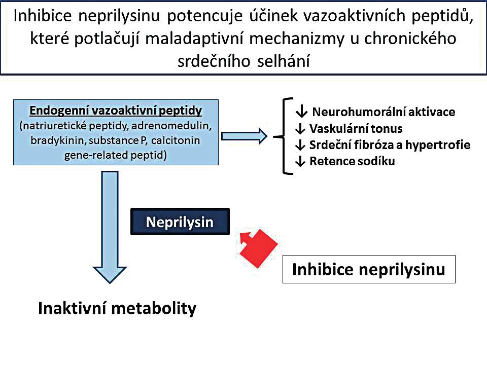 Schematické zobrazení účinku inhibitoru neprilysinu